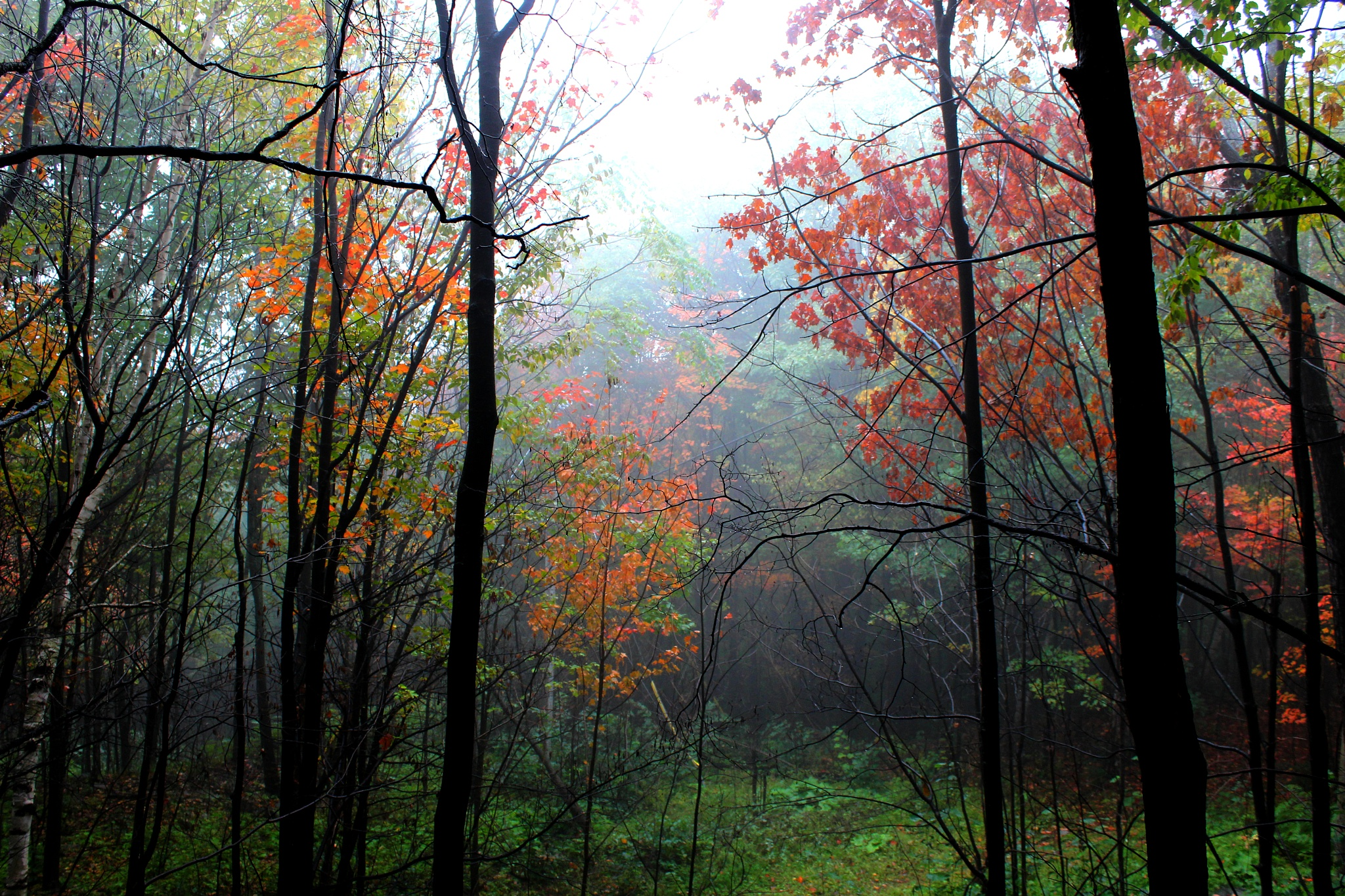 Autumn... by Ewa