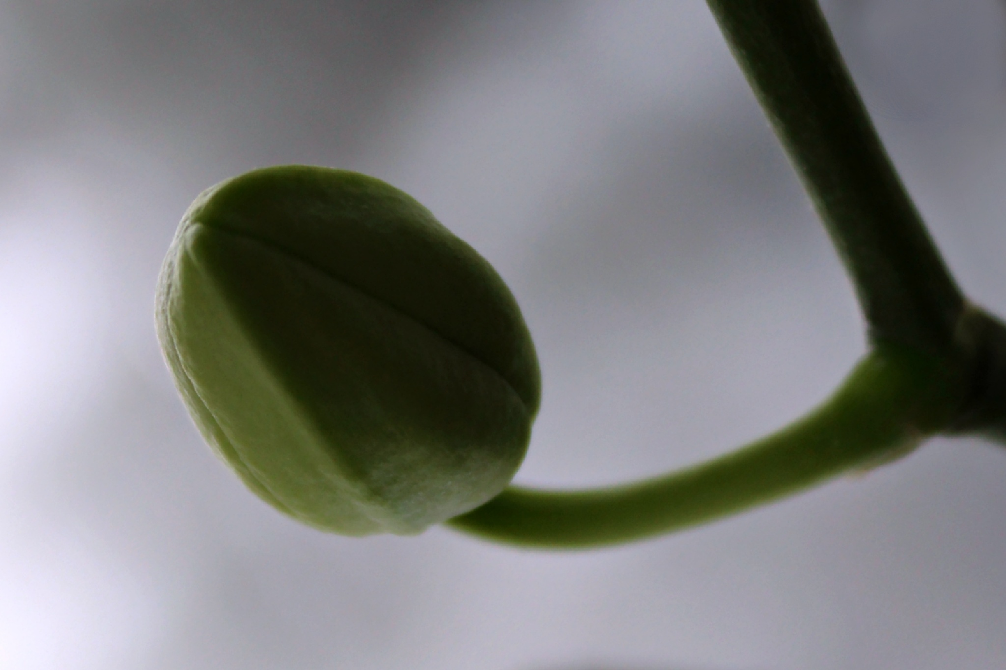 My orchid will bloom soon by Ewa