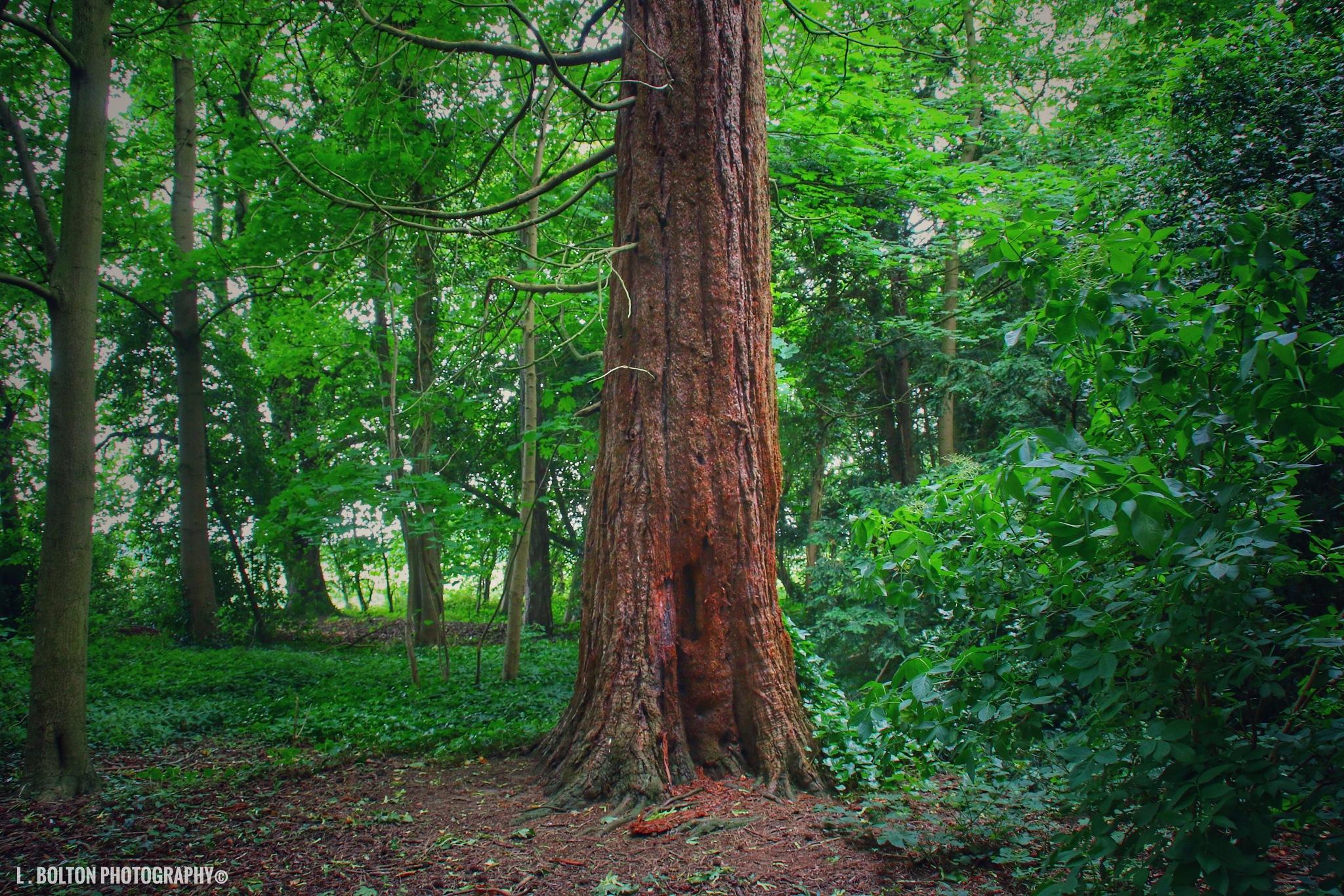 Fairy Tree by Lynnette Bolton