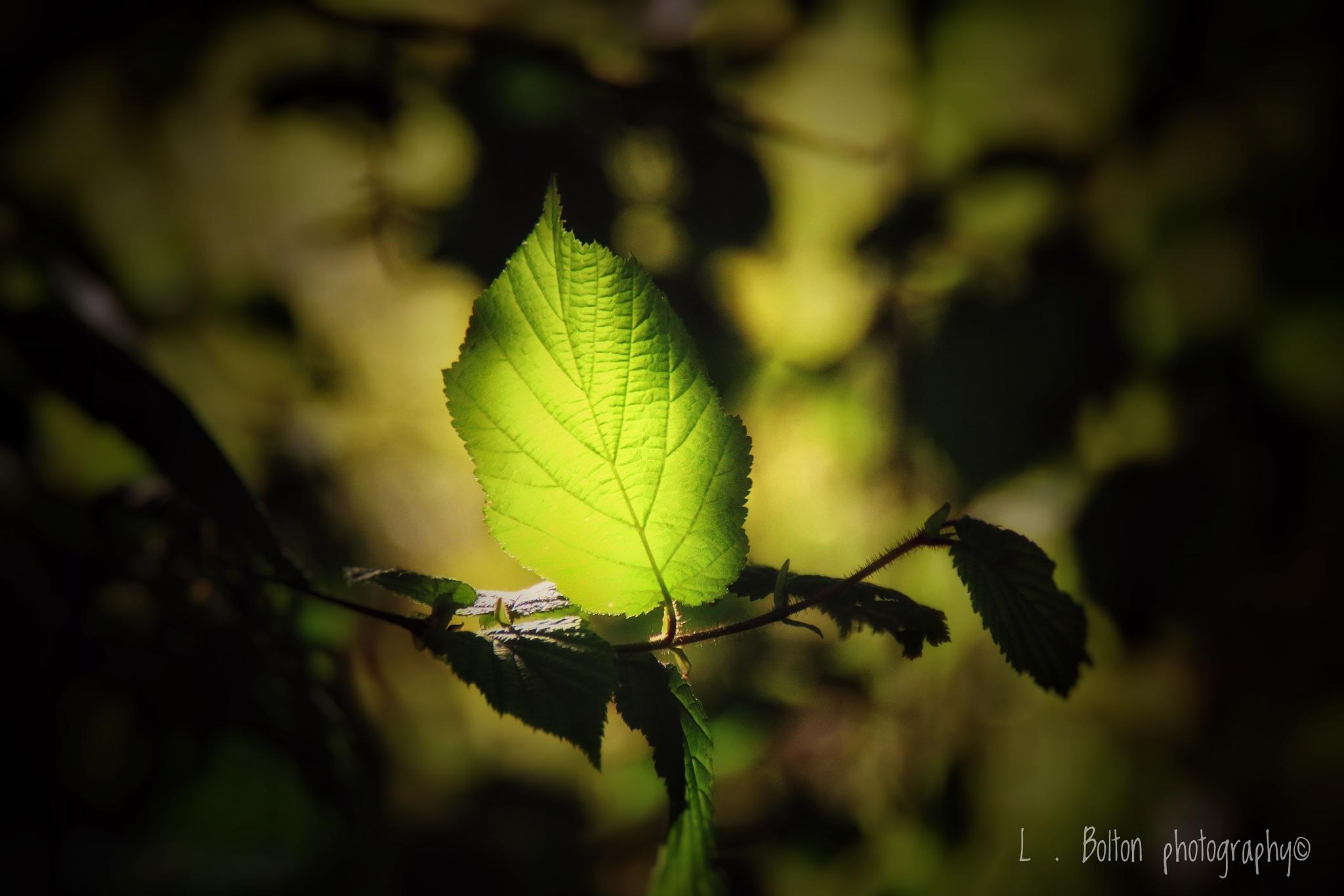 Light by Lynnette Bolton