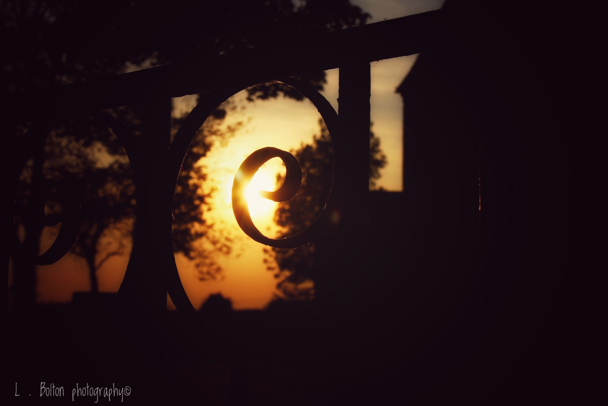 Silhouette  by Lynnette Bolton