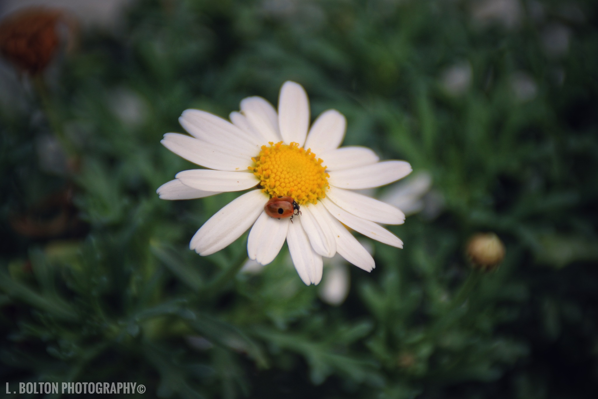 Flowers & Bugs by Lynnette Bolton