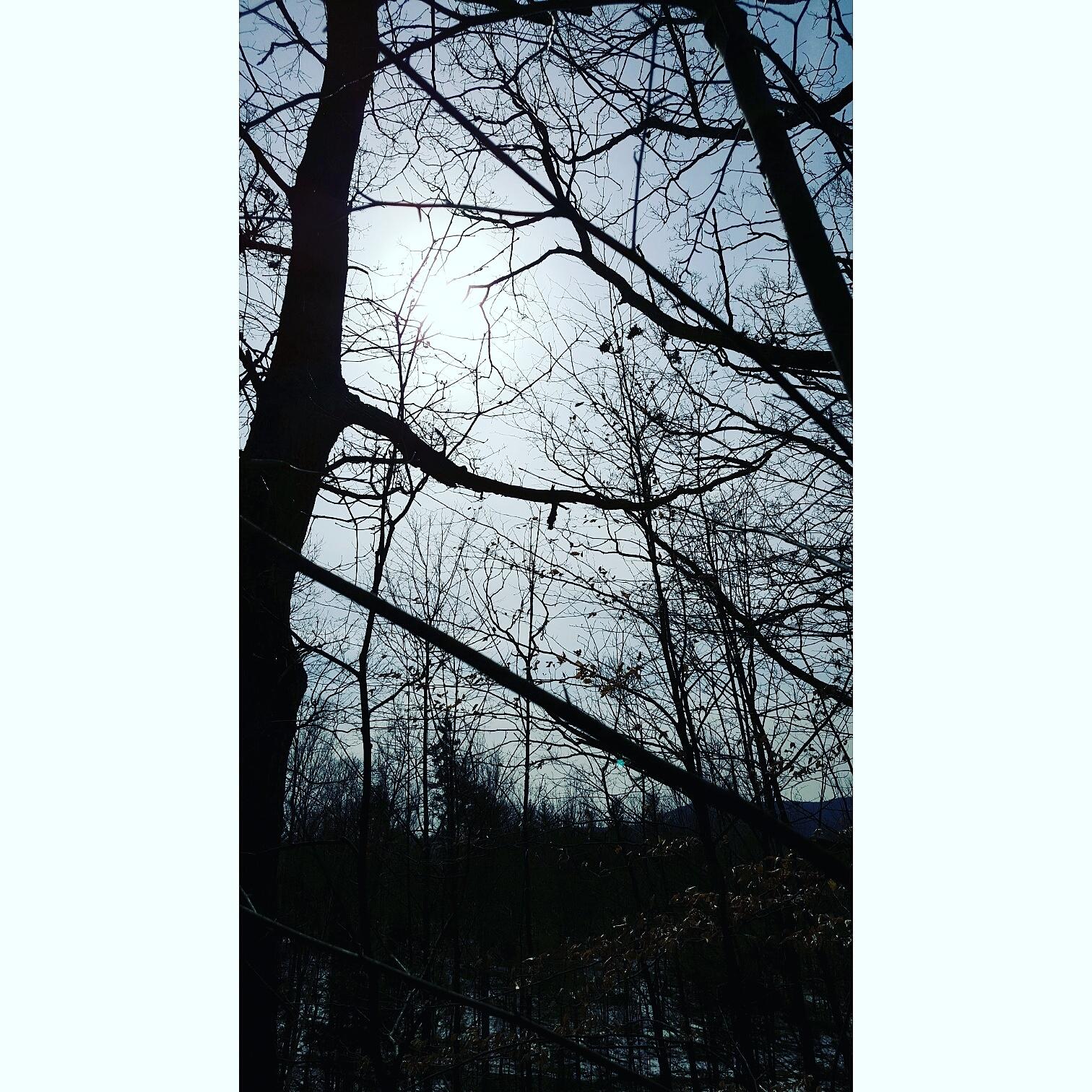 Lost in the woods by Kyla Viana