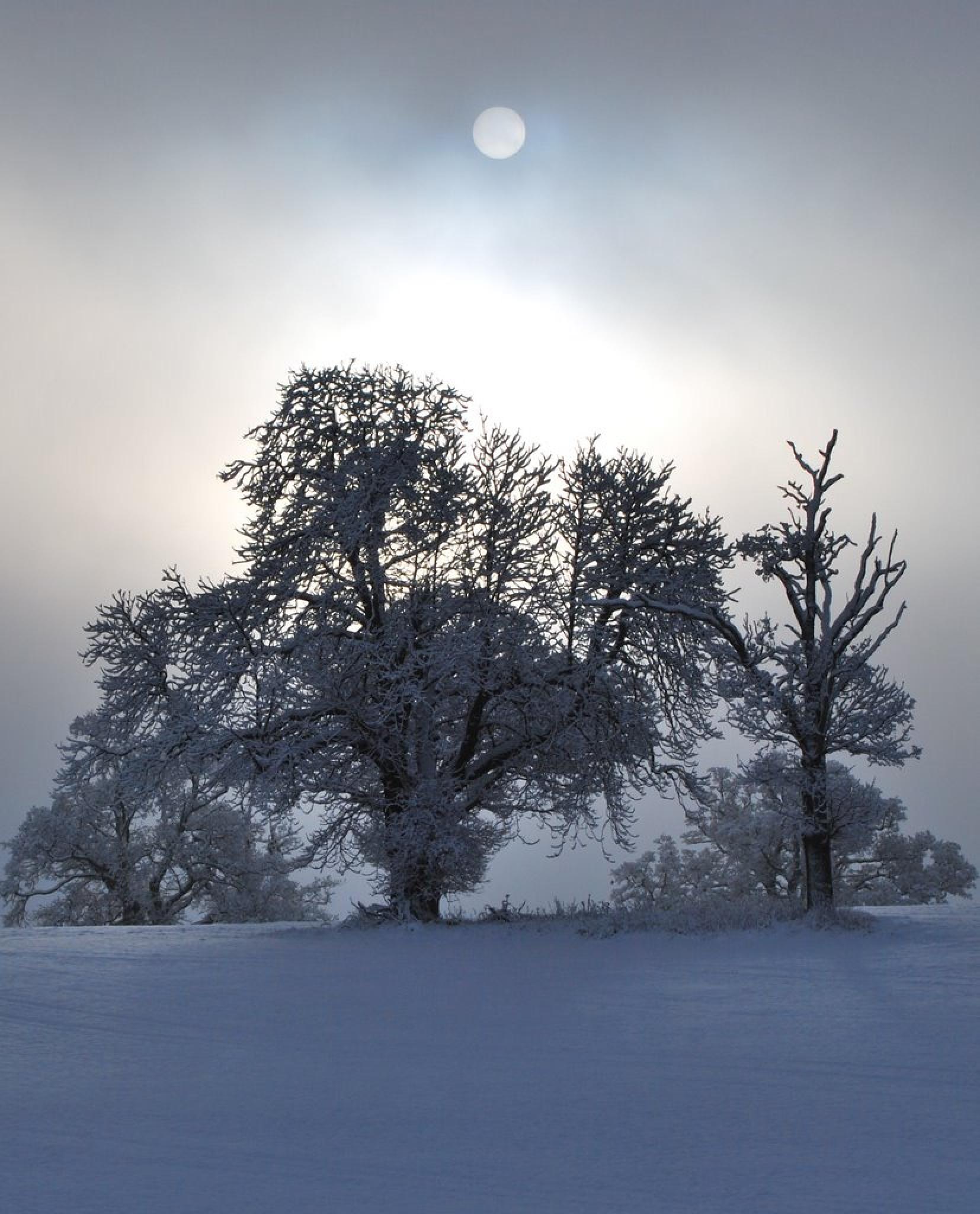 WINTERS BEAUTY by Chris Willison