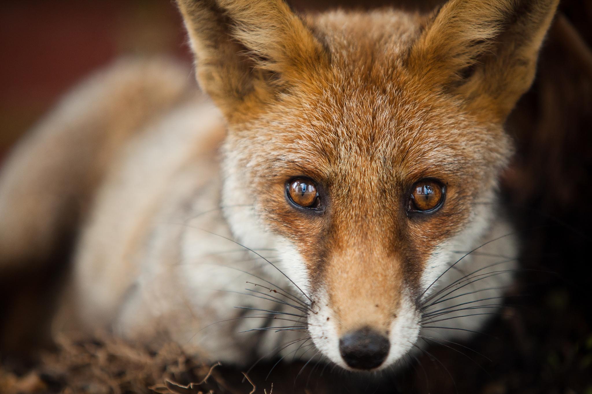 Talented Mr Fox by Dade Freeman