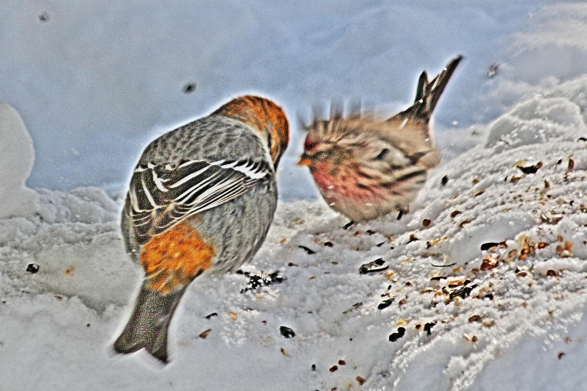 King Bird by Connie Kerik Holloway