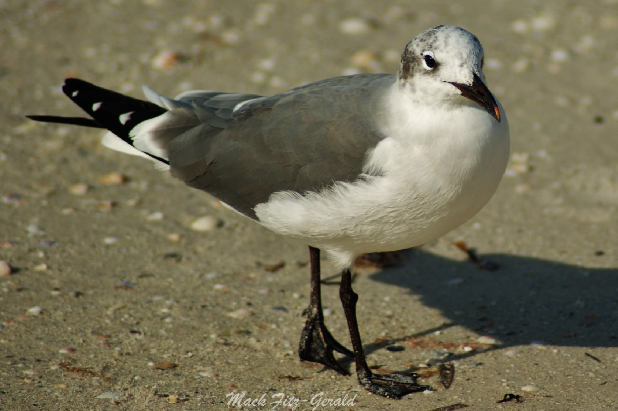 Seagull Stance  by Mack Fitz-Gerald
