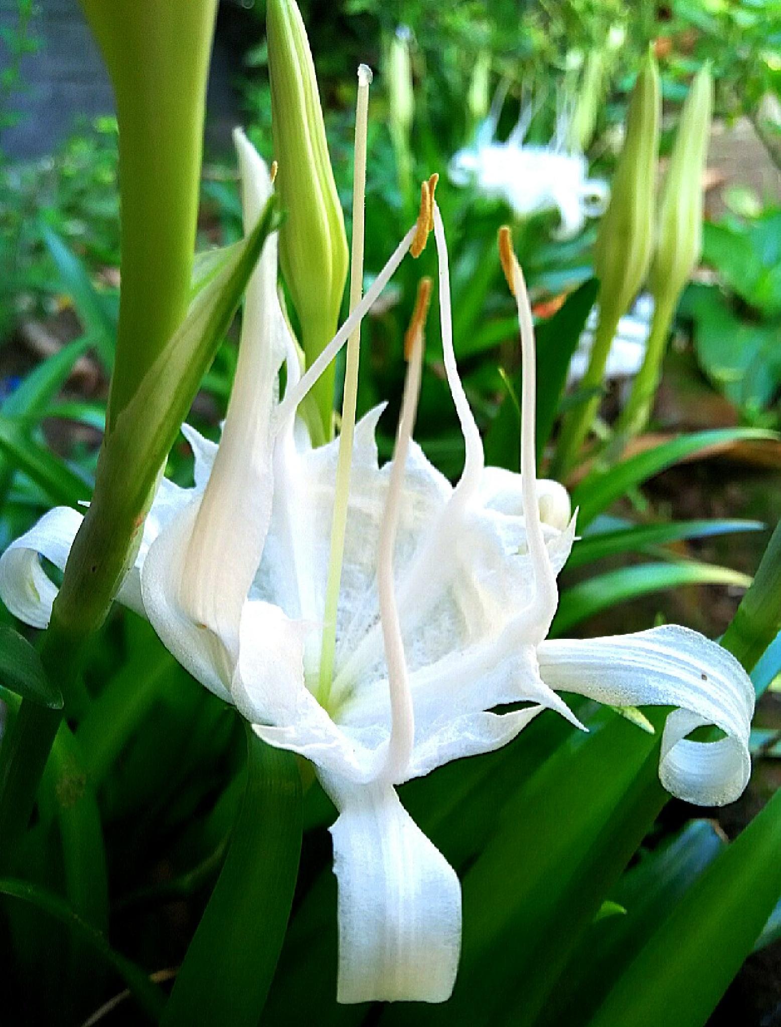 putih by Anindi Utami