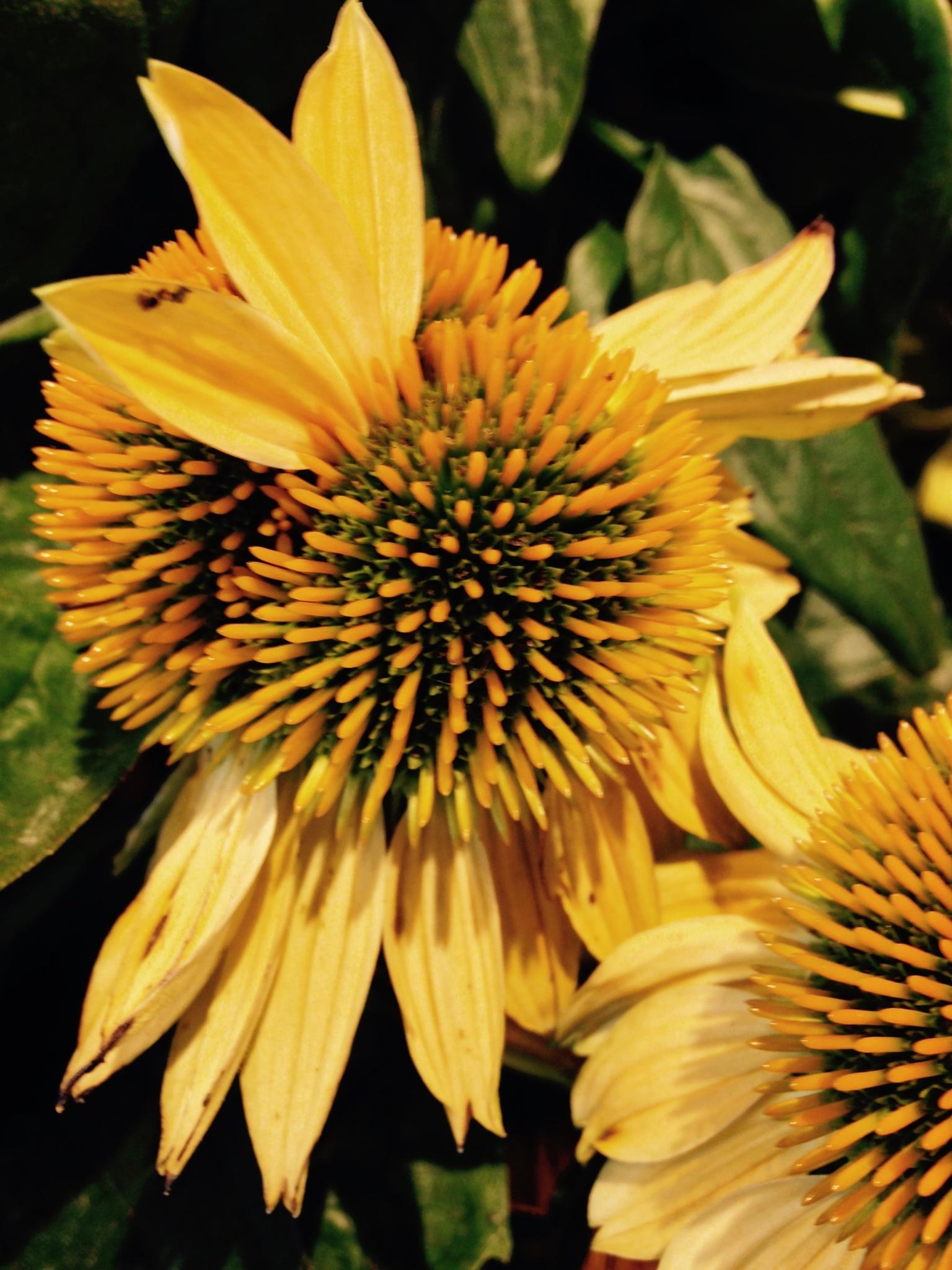Flower by gabrielehelenebittner
