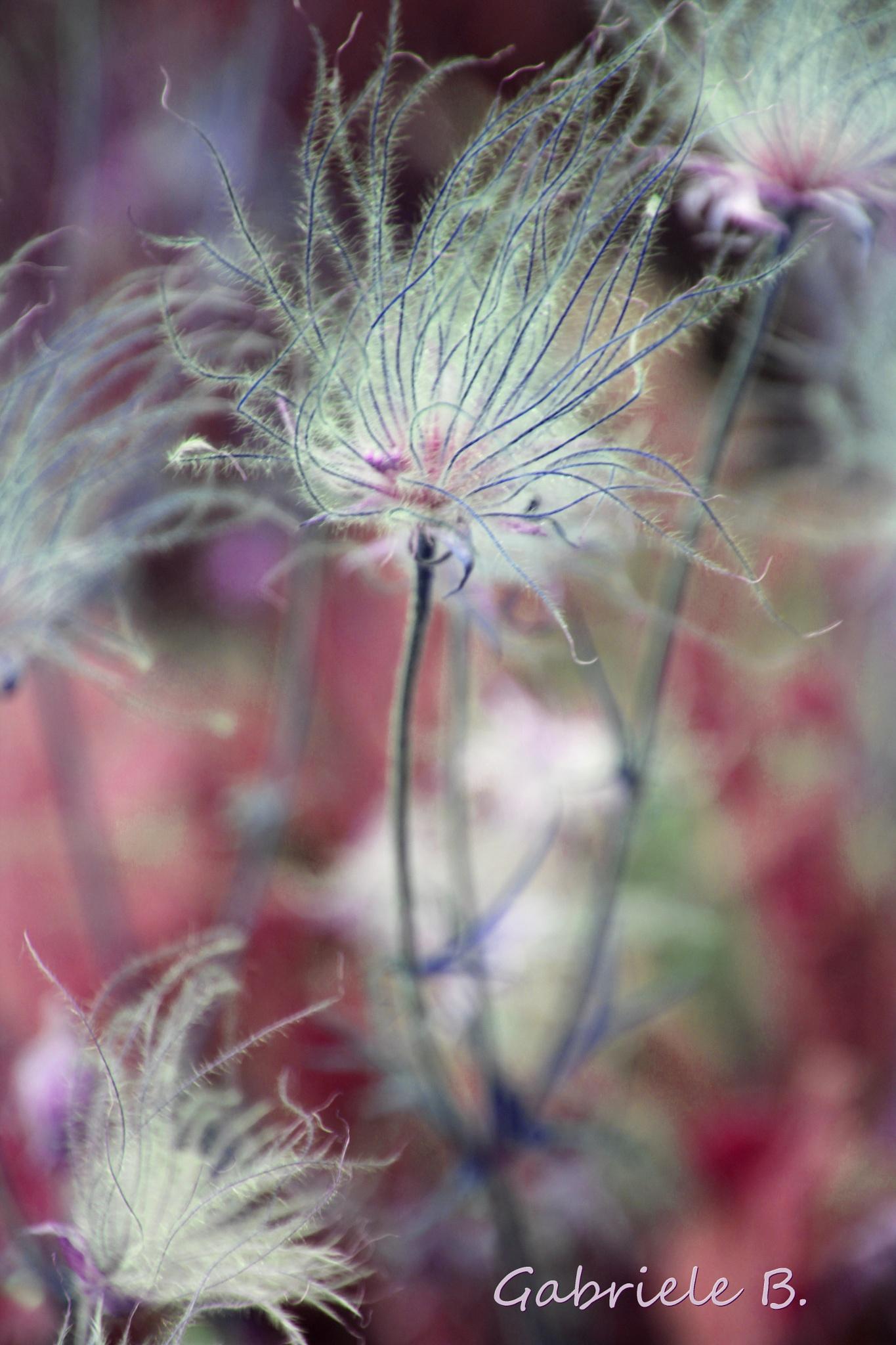seeds by gabrielehelenebittner