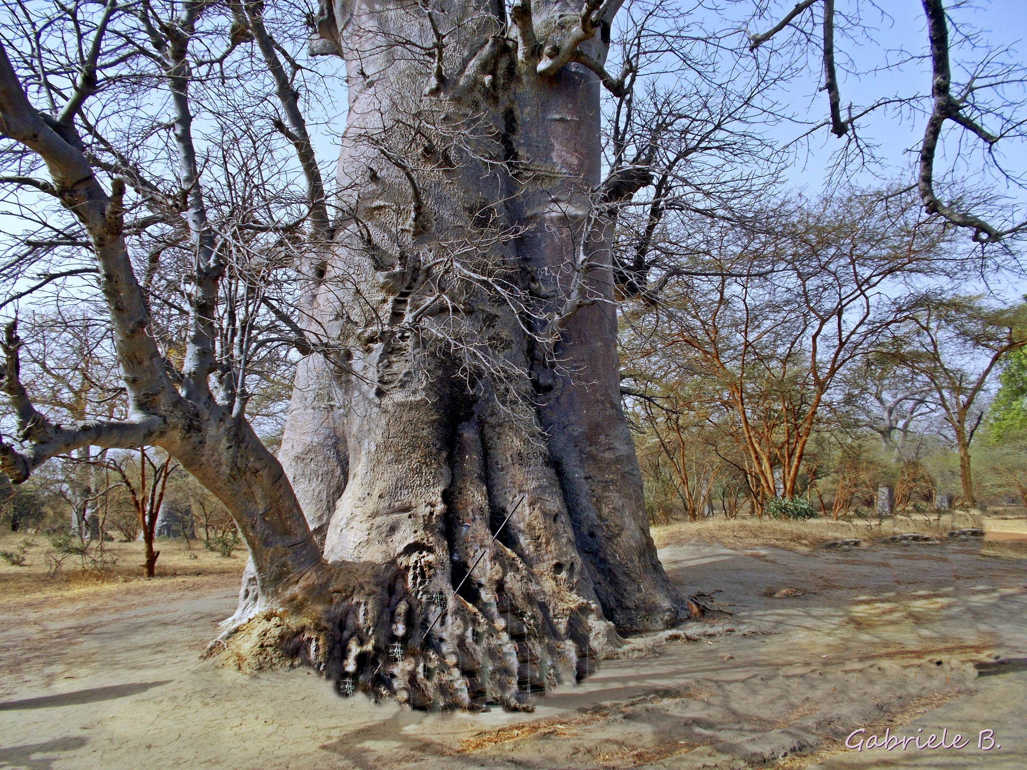 Holy tree by gabrielehelenebittner