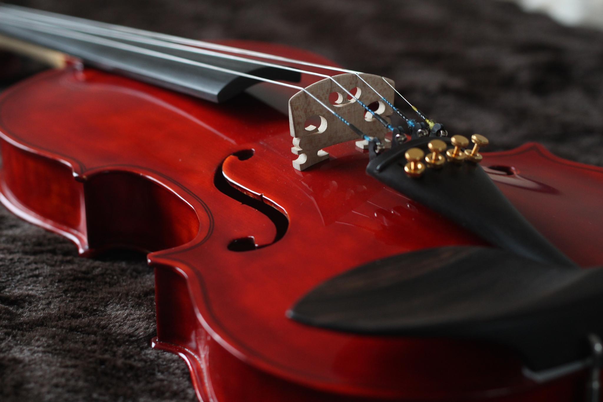 Red Violin! by Farzaneh Ha