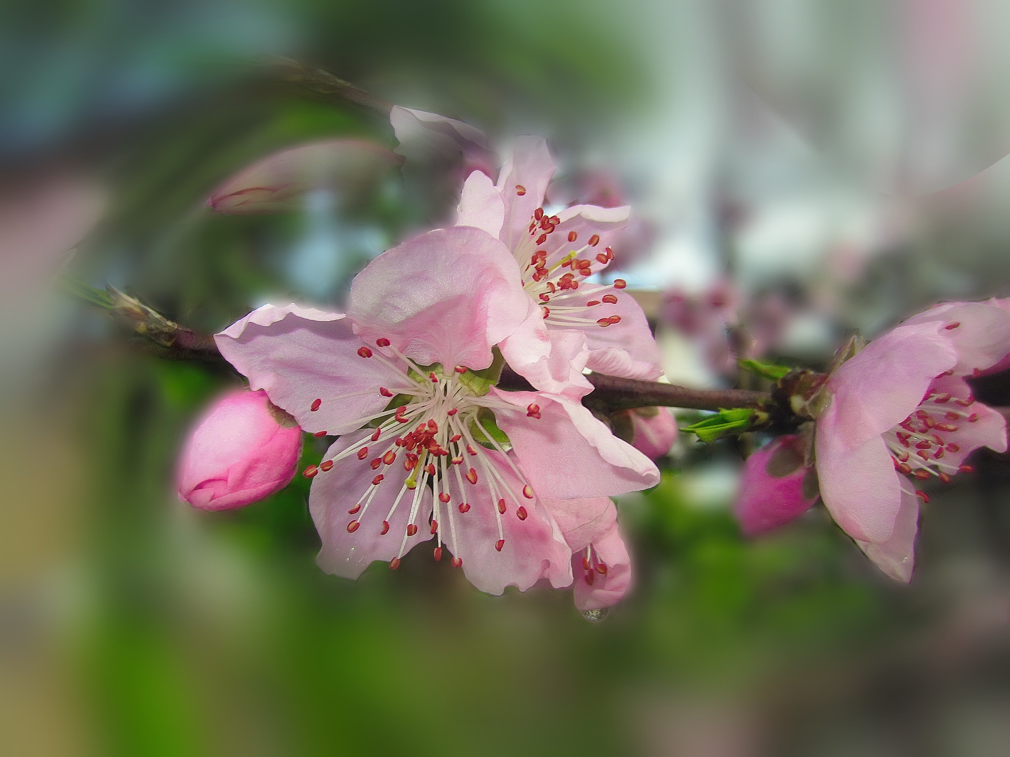Blossom by kate1480