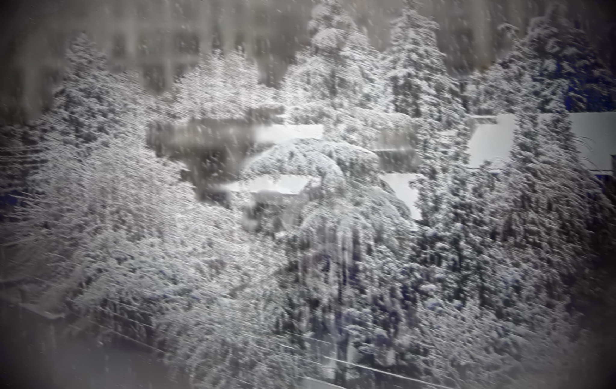 Heavy snow to day in Tehran by kate1480