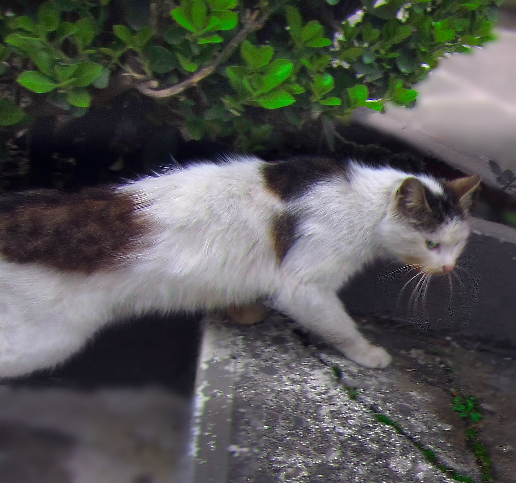 Alley cat by kate1480