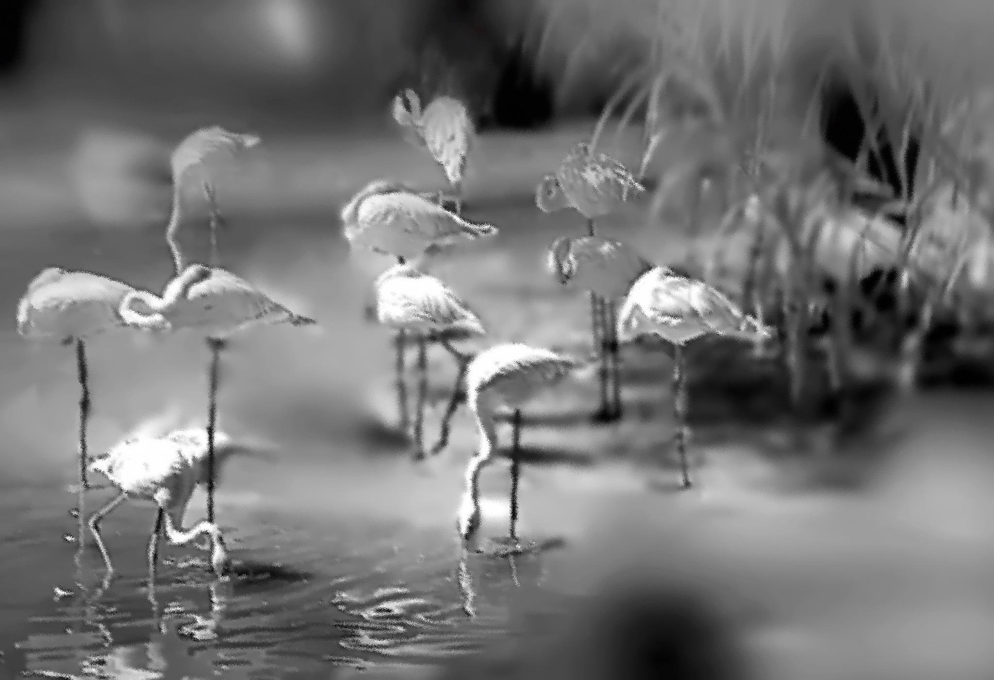 Flamingos by kate1480