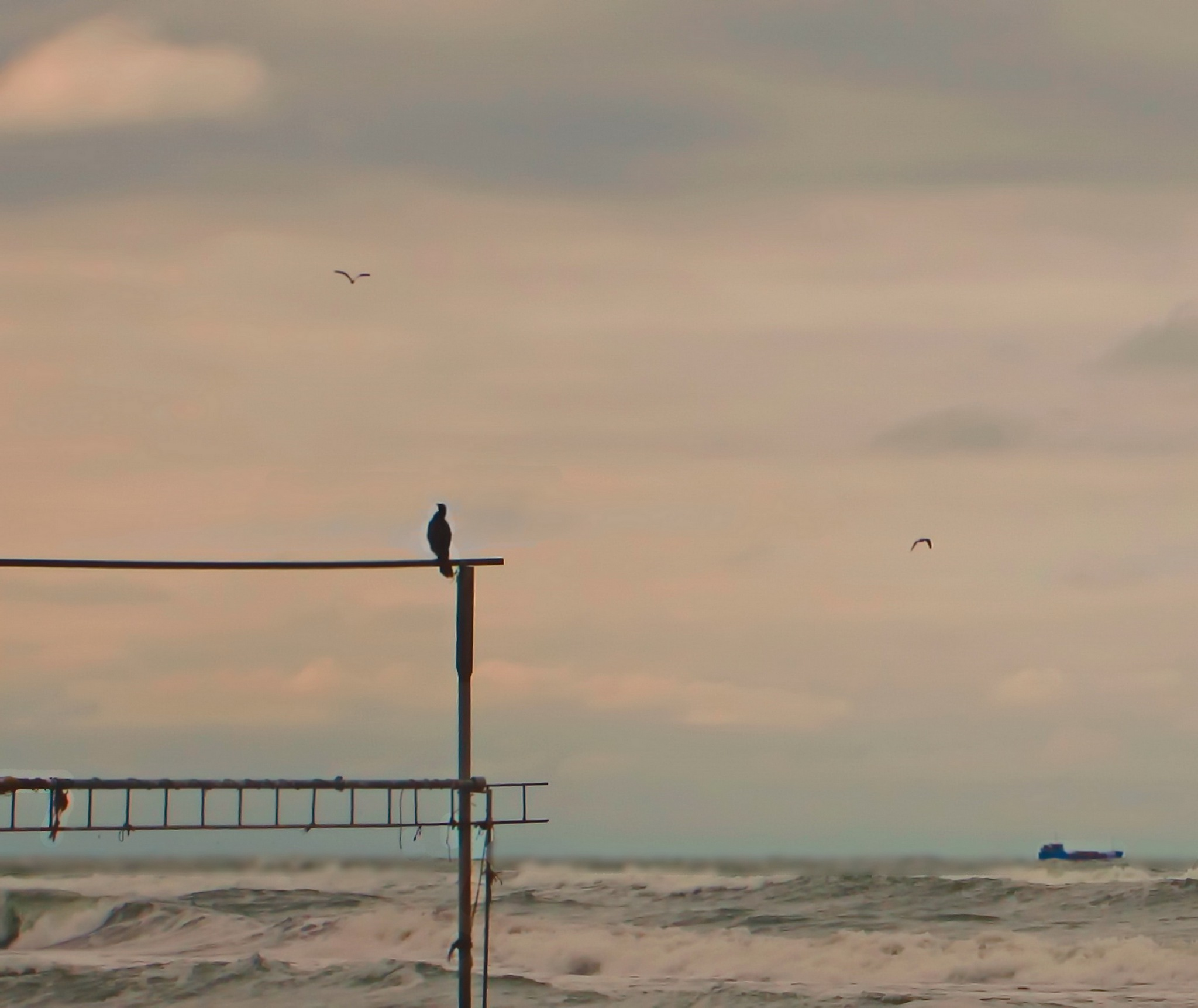 Birds and boat by kate1480
