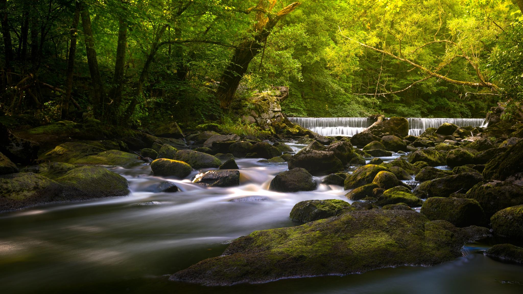 Local Creek by Maths Karlsson