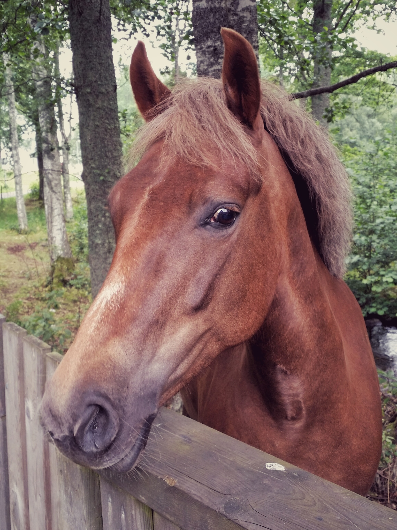 Horses used to be the backbone of our society  by Martin Norén
