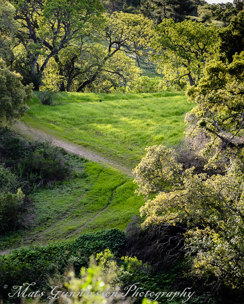 Green hills in Silicon Valley by MatsGunnarssonPhotography