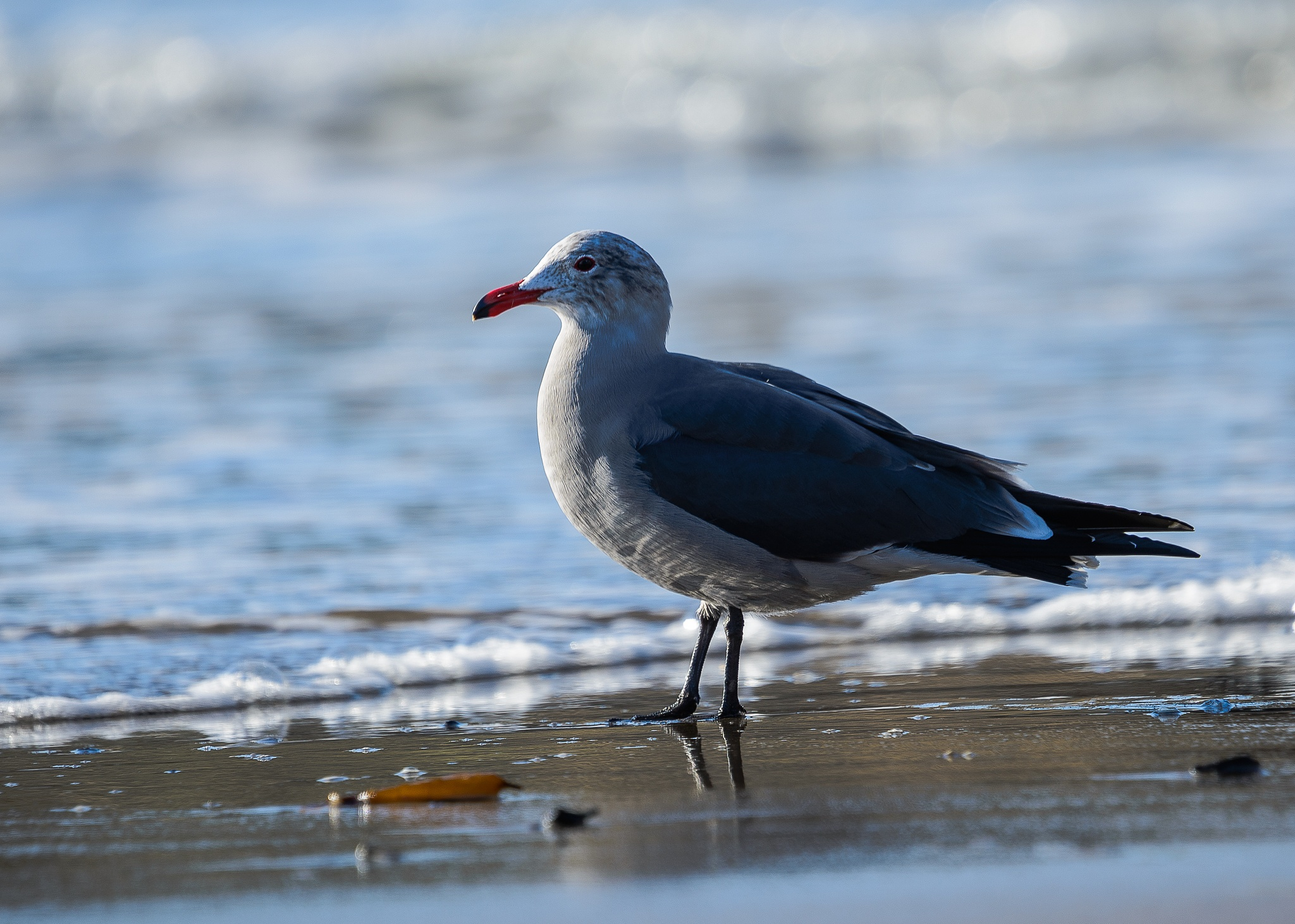 Seagull by the water by MatsGunnarssonPhotography