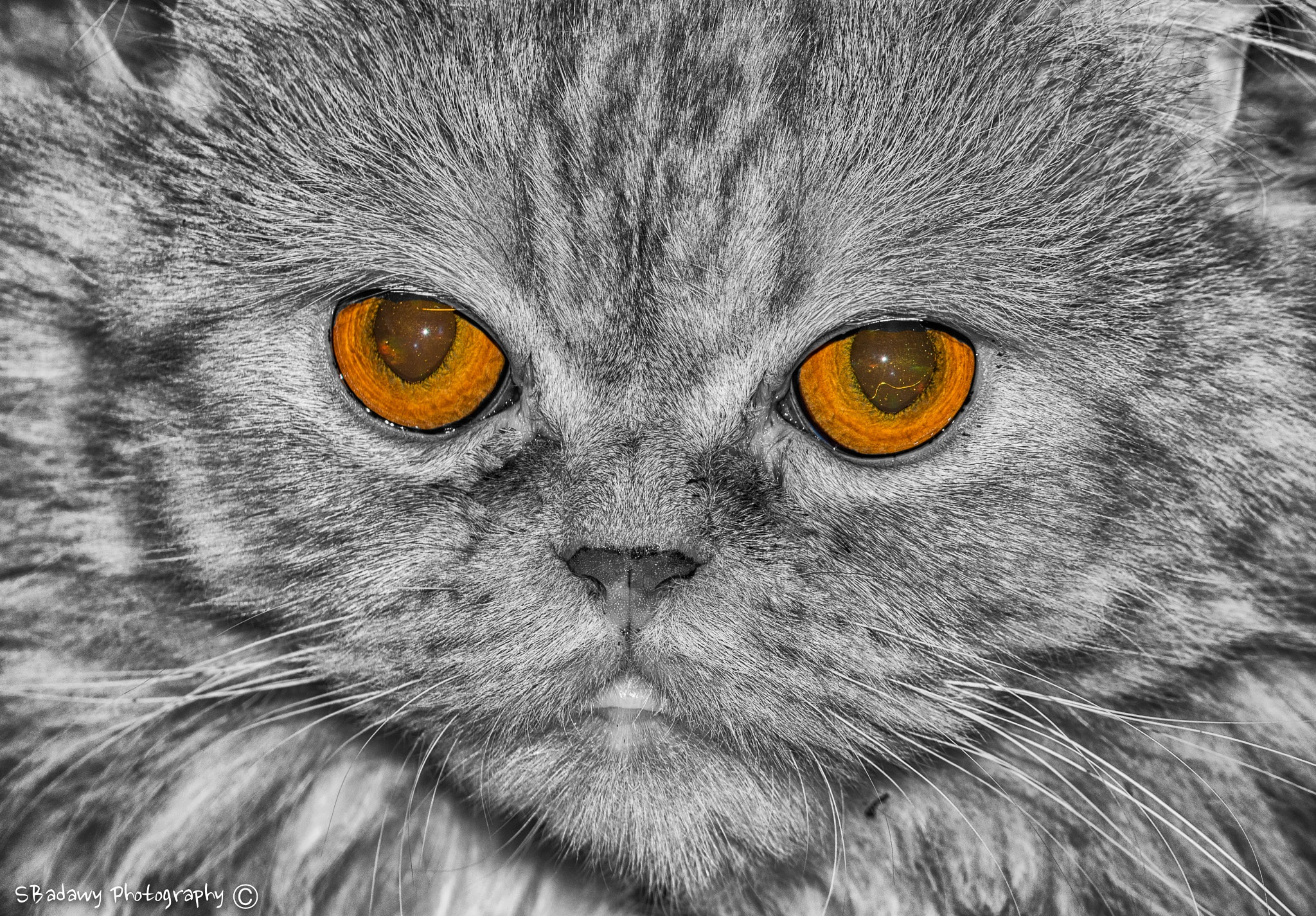Photo in Animal #cat eyes