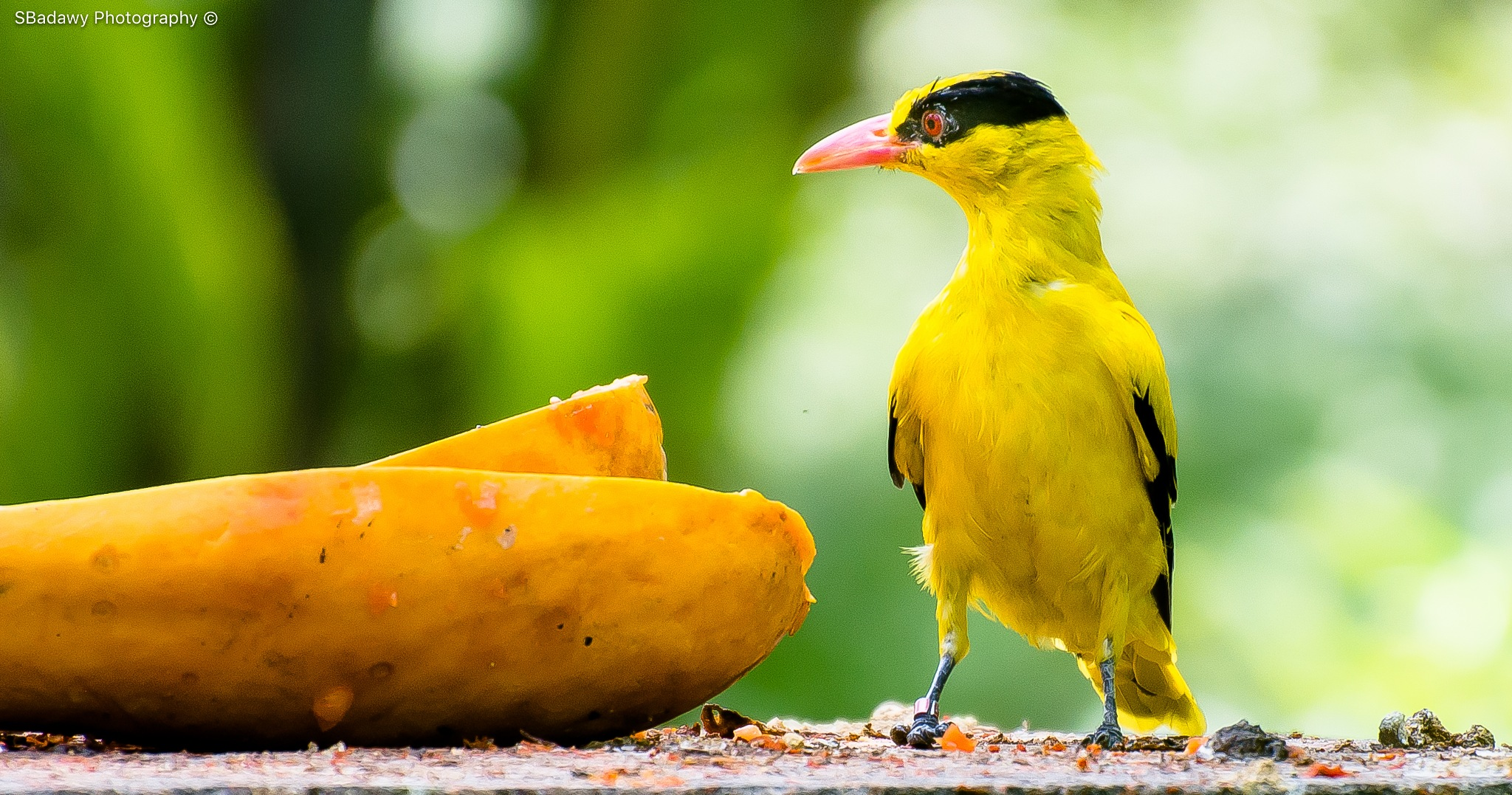 yellow Bird  by Sherif Badawy
