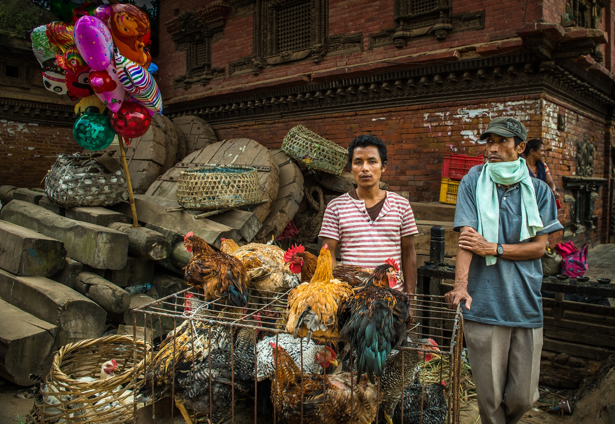 Chicken Sale by Susan Laurie