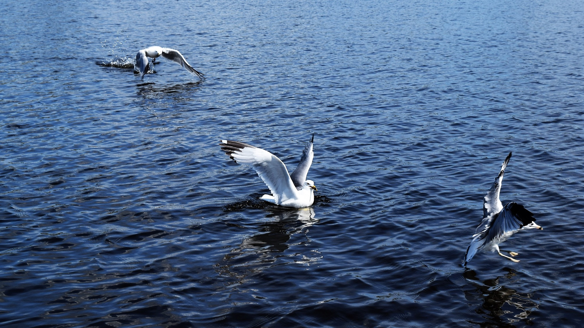 Seagulls 2 by Tracey Tg Gergulich