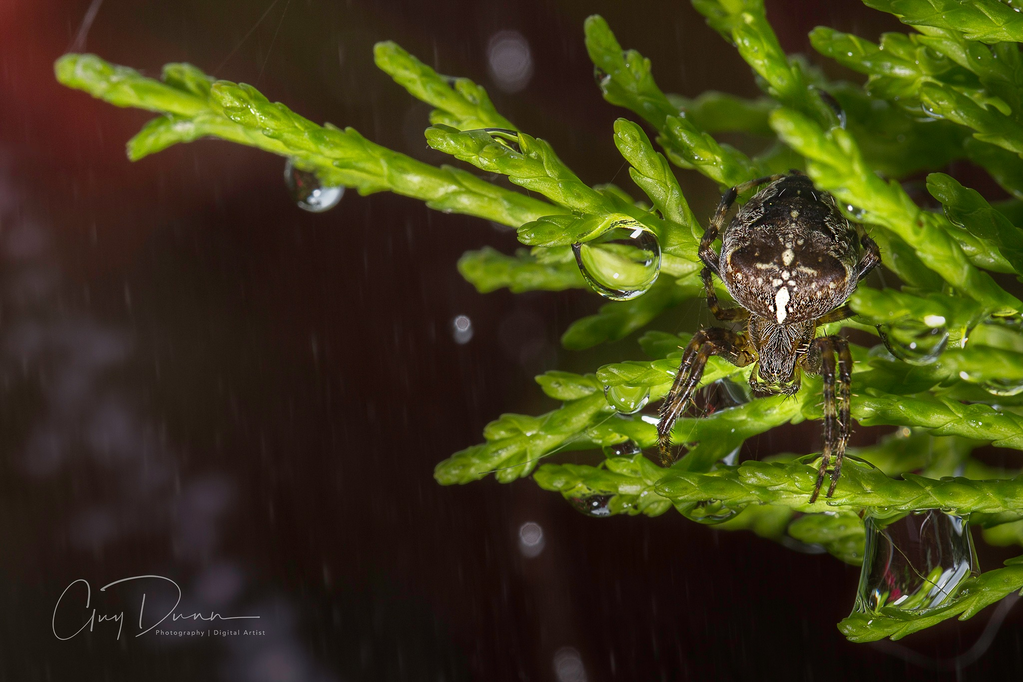 Incy WIncy Spider by Guy Dunn