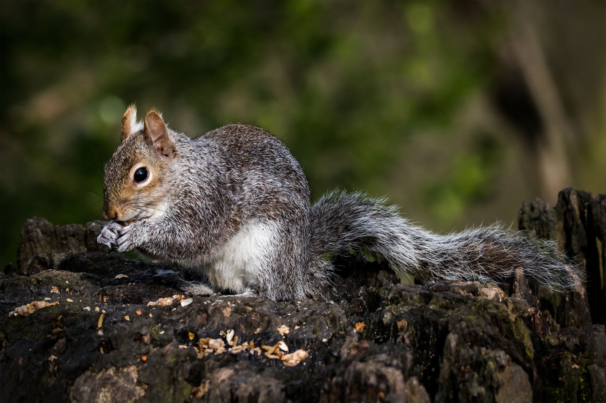 Going Nuts 2! by Guy Dunn