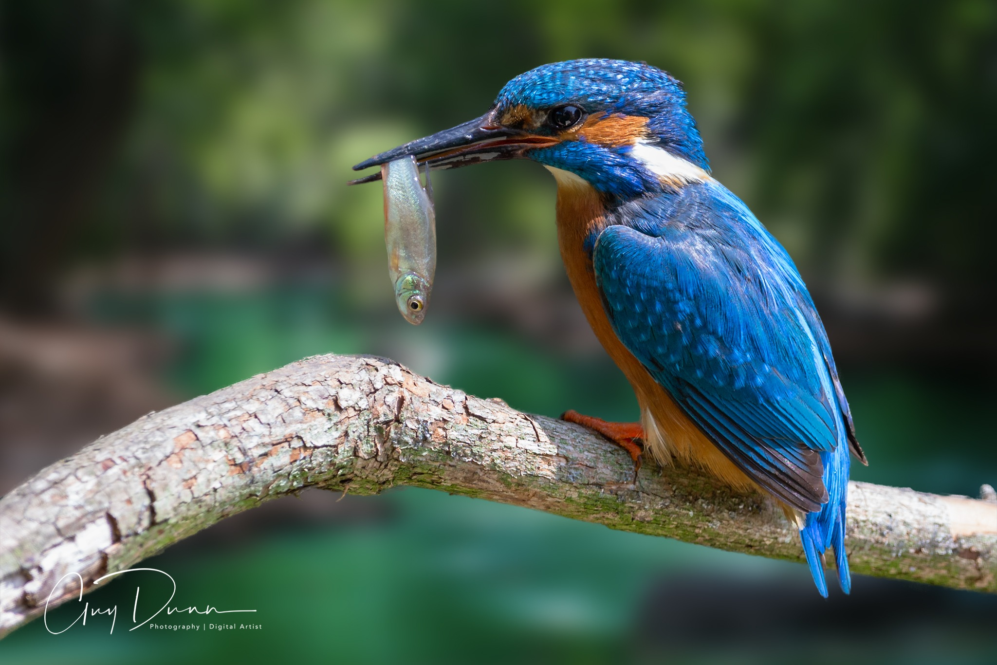 Catch of the day by Guy Dunn