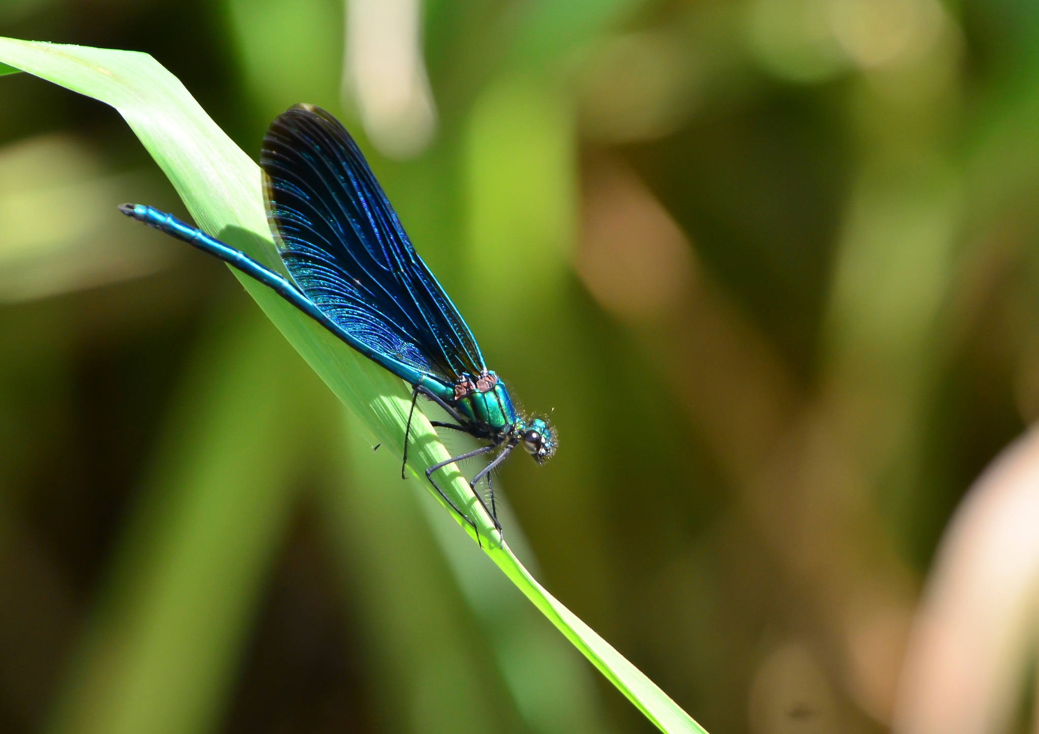Photo in Nature #wildlife #nature #dragonflies