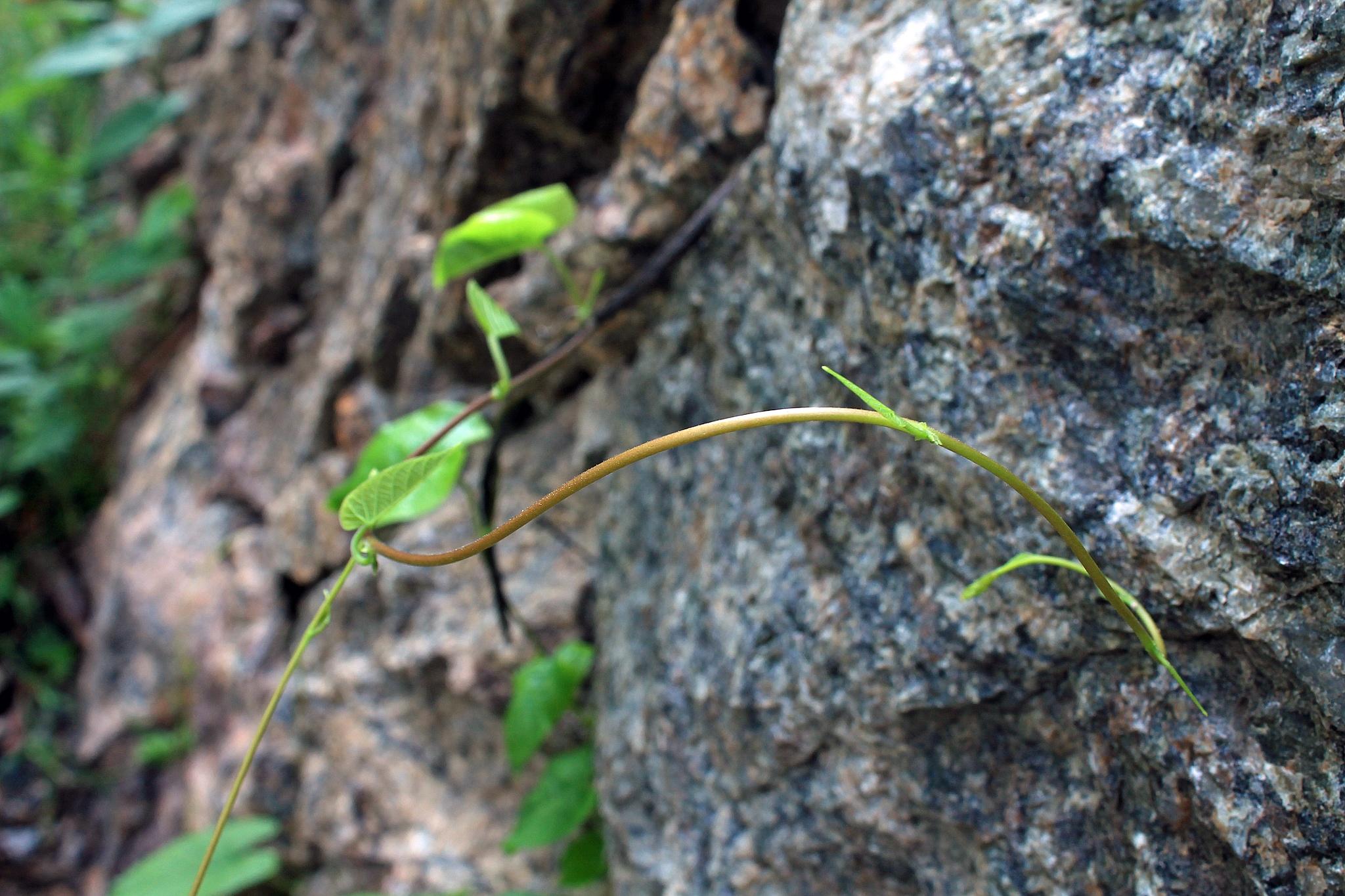 climbing by Gadini