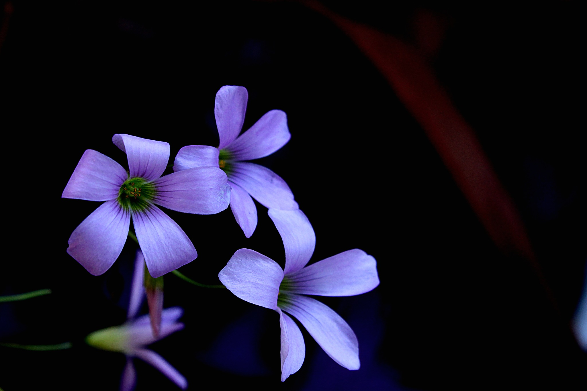 violet flower by Gadini