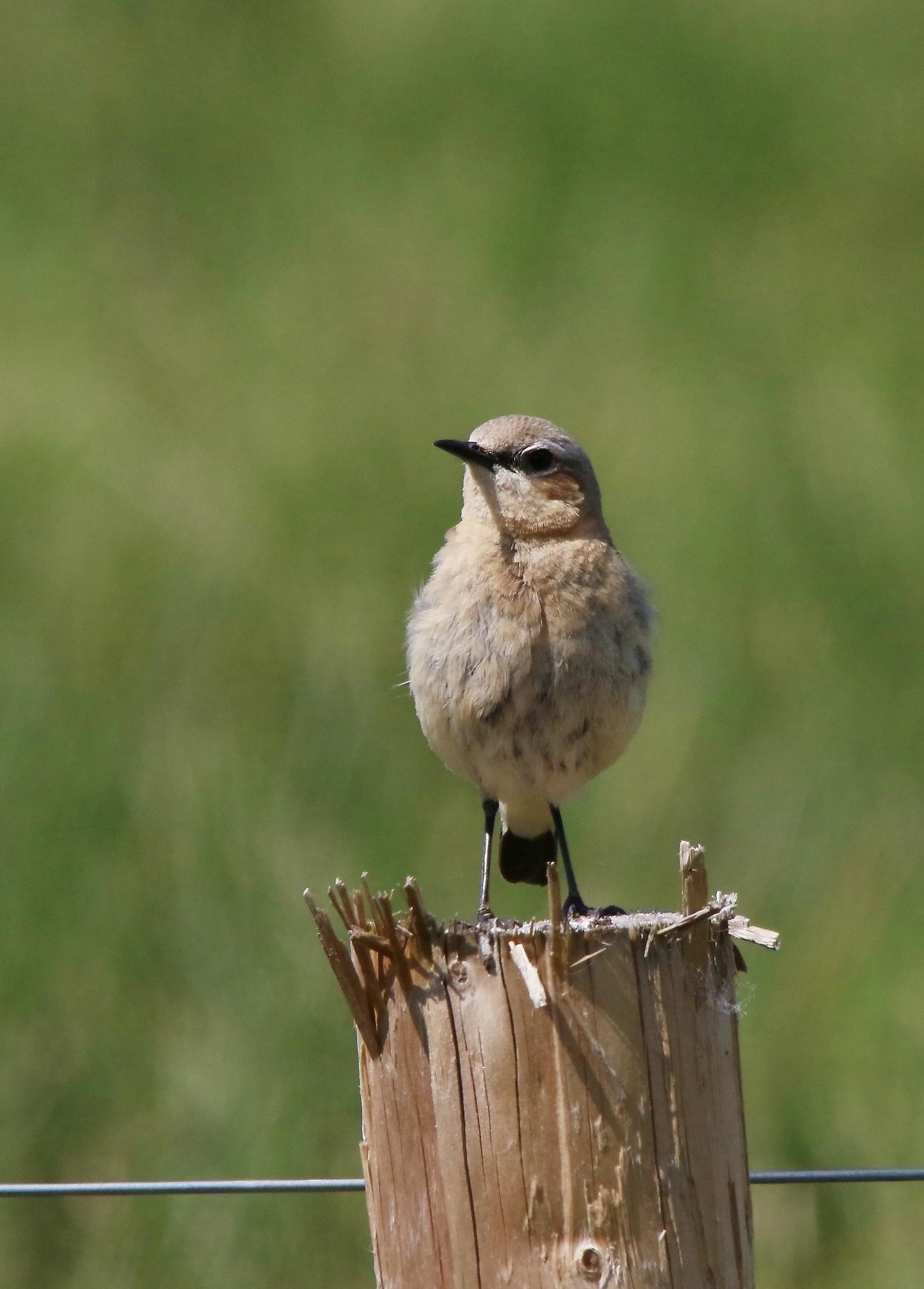 Poster bird! by annecotton