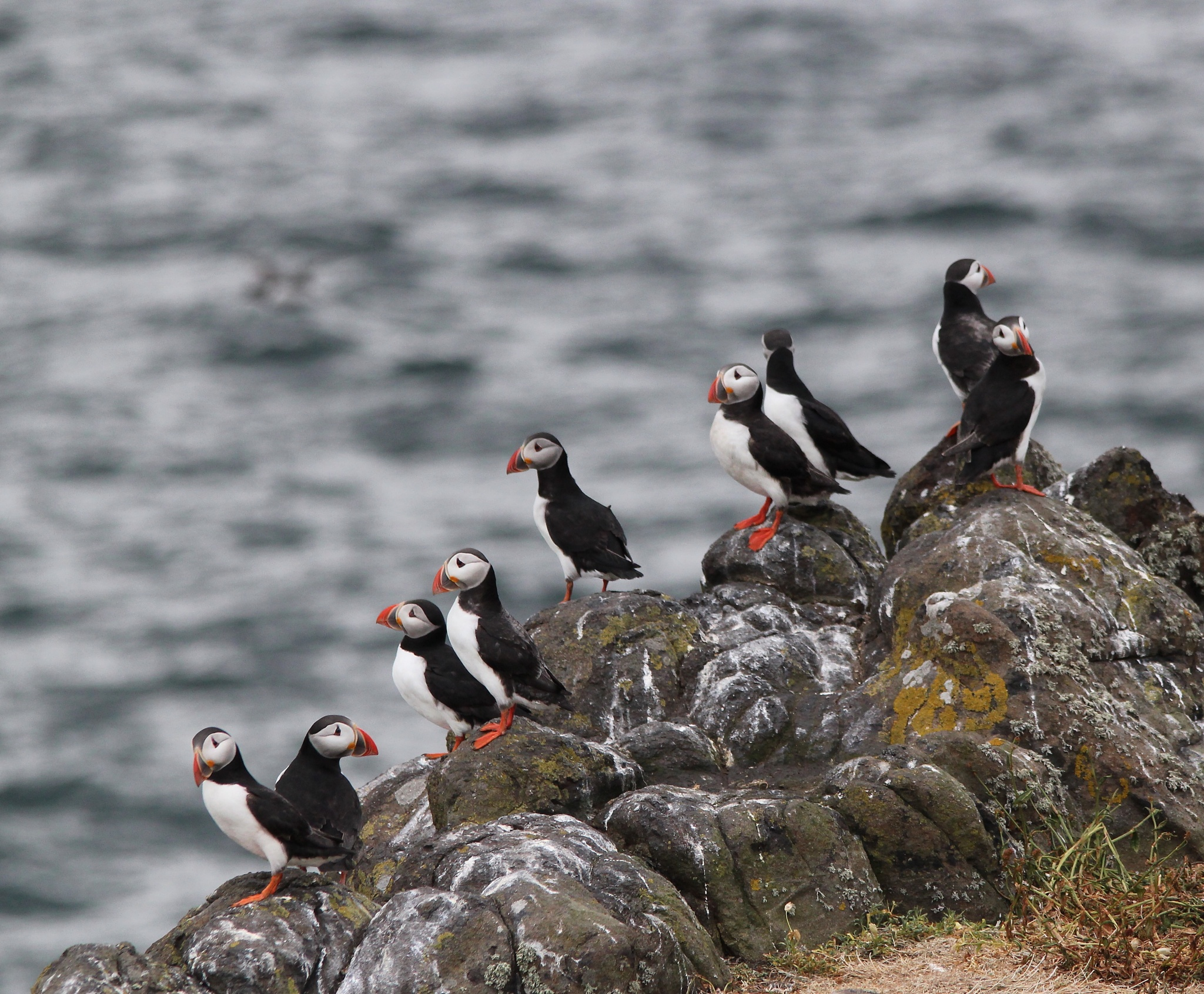 Puffins on the Isle of May by annecotton