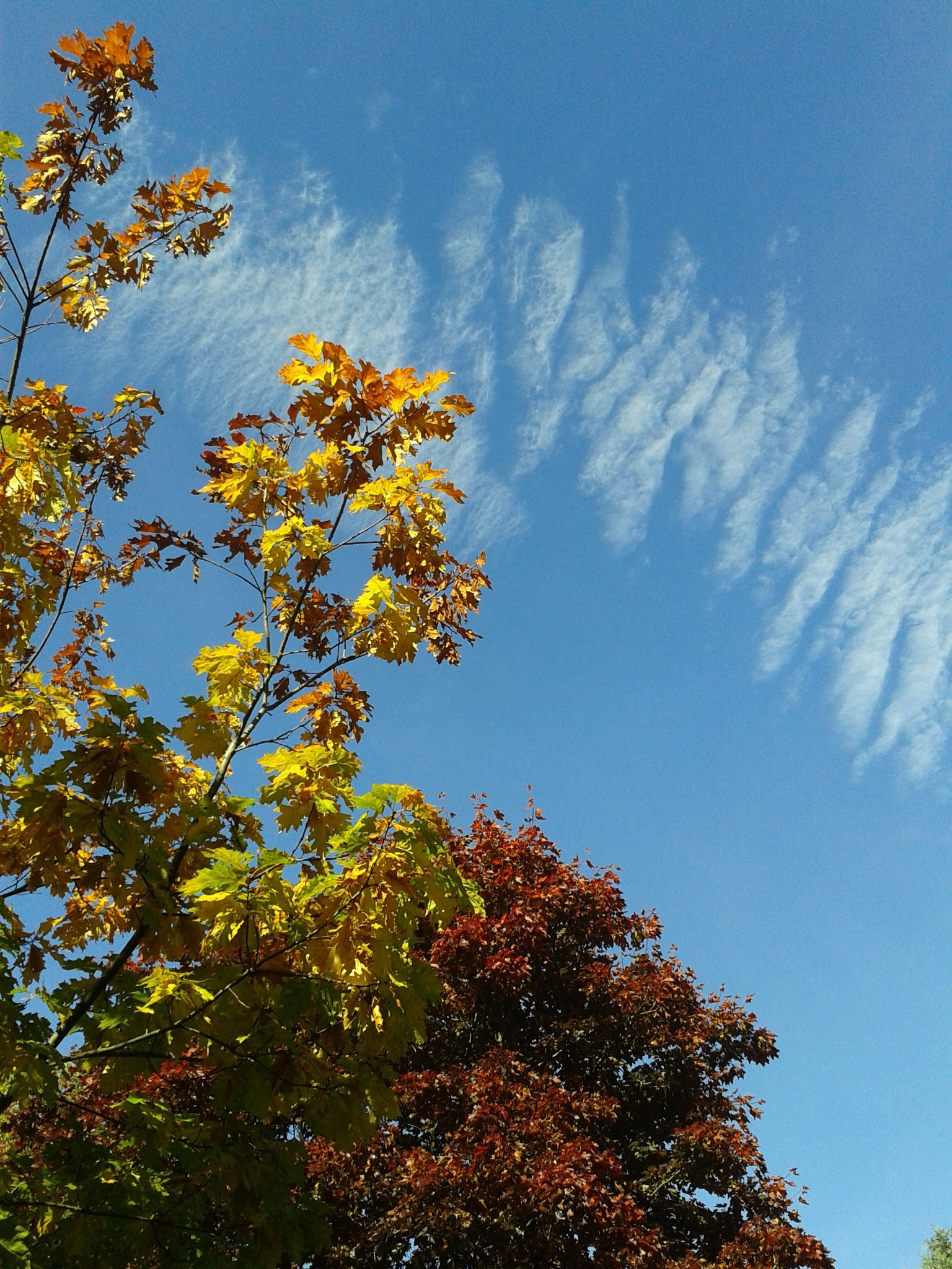 Autumn colours and clouds by annecotton