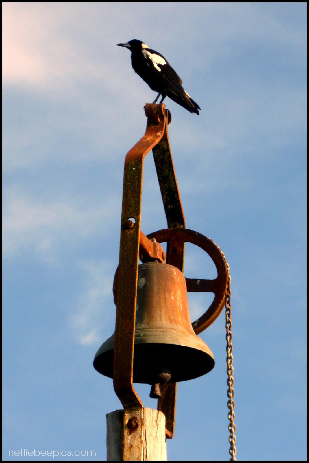 Magpie Bell Keeper by Nettie Bee