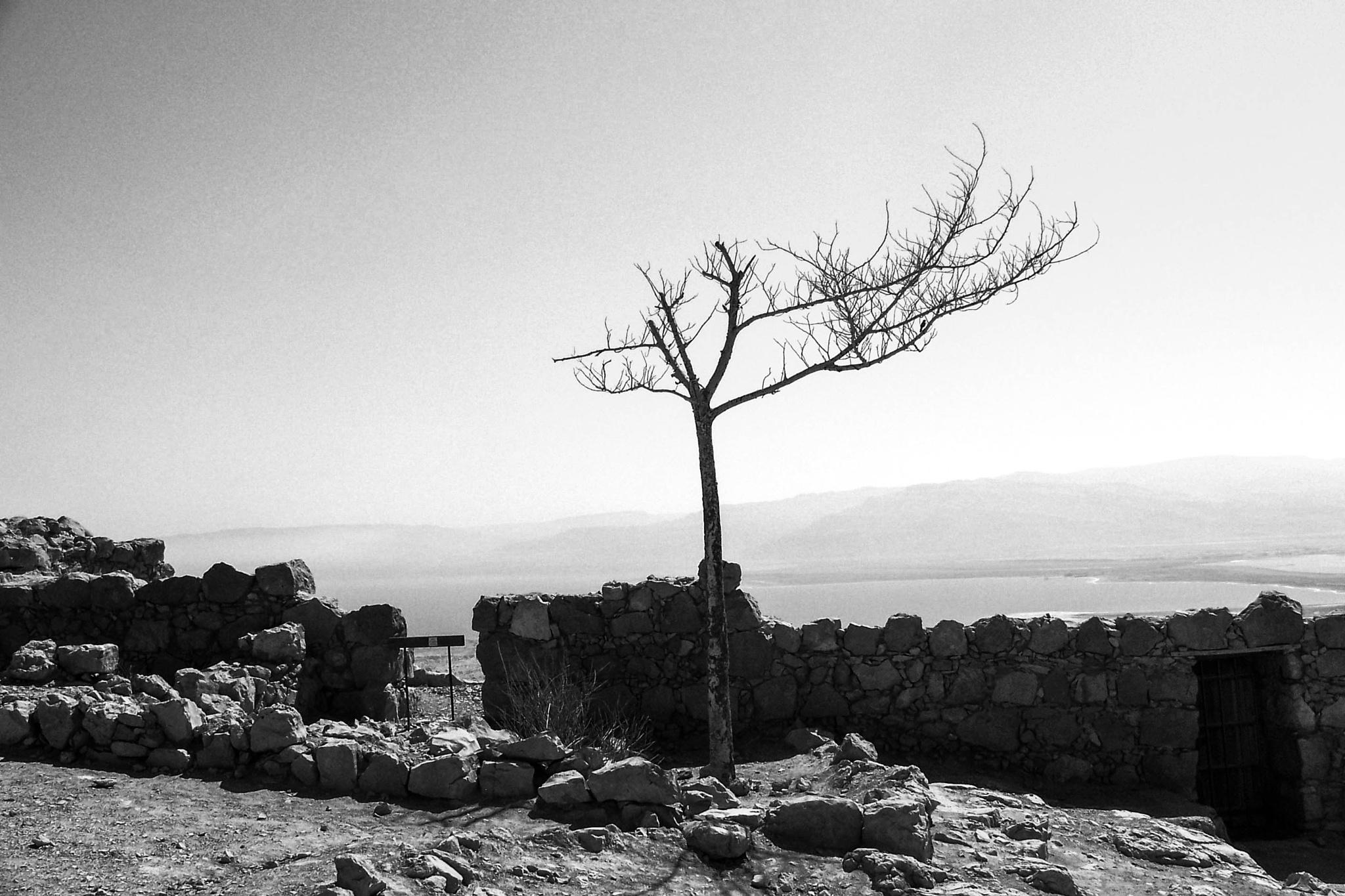 lone tree by Elise Ginsburg MacKay