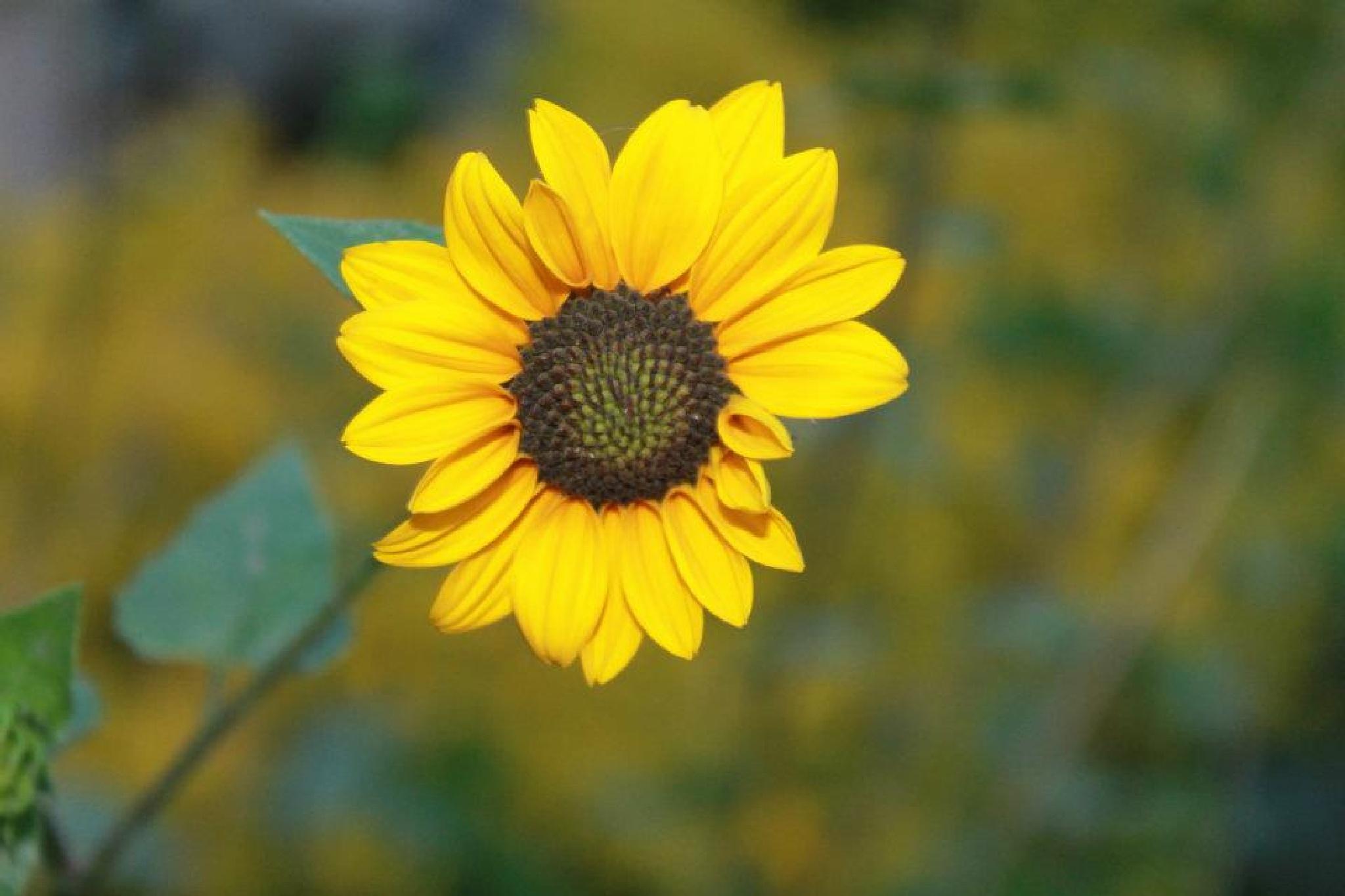 Sunny Flower by Archana Sawant