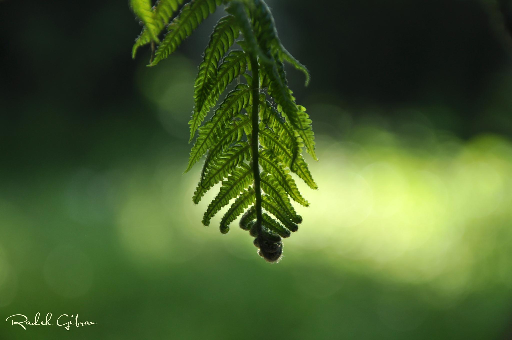 Leaf by Radek Gibran