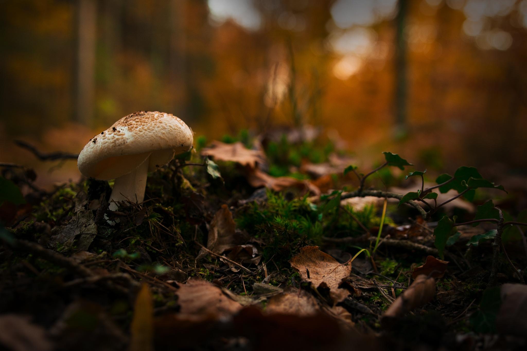 Amongst leaves by Snufkin