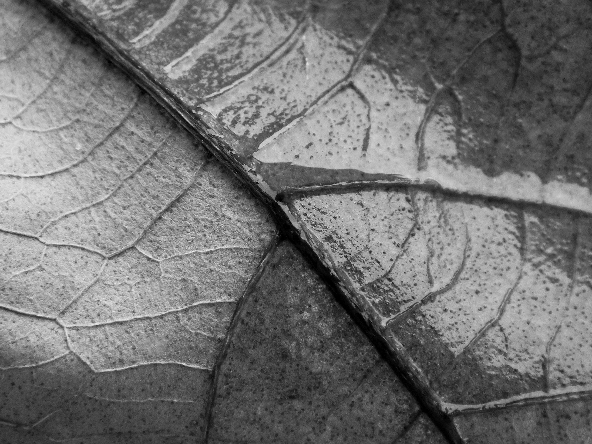 Leaf veins by Nikolett Rostási