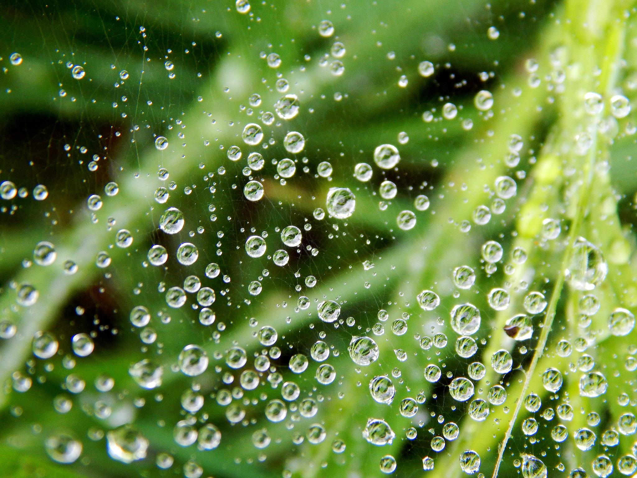 Dewdrop and spider web by Nikolett Rostási