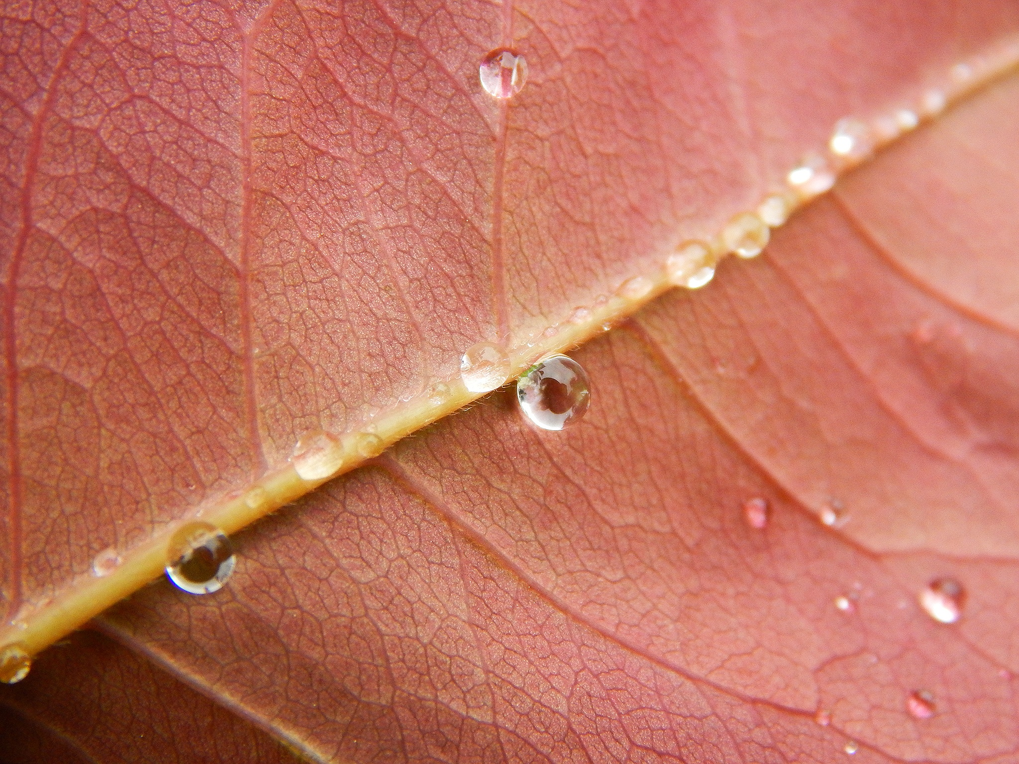 Raindrops on a leaf by Nikolett Rostási