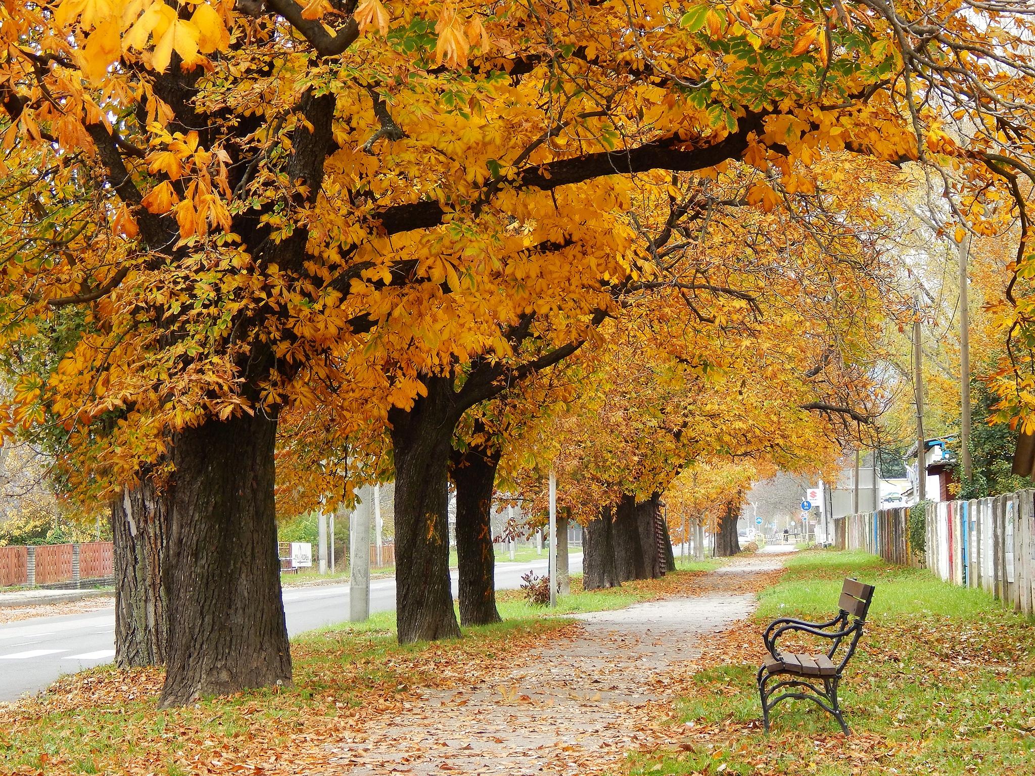 Autumn walk by Nikolett Rostási