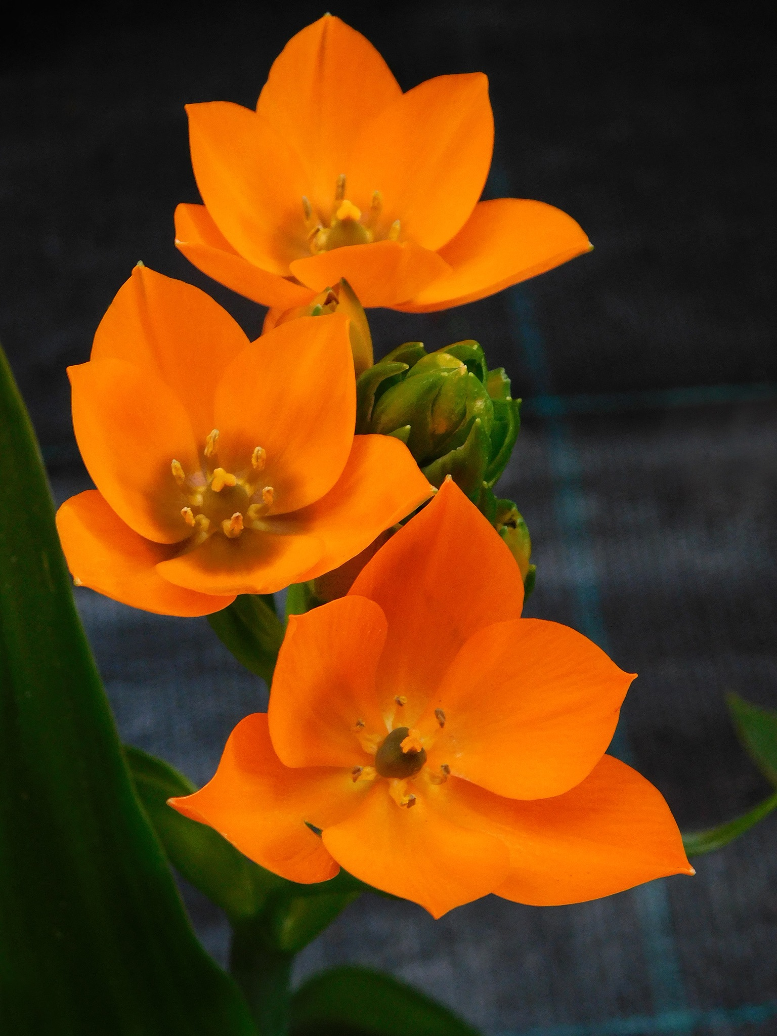 Orange flower by Nikolett Rostási