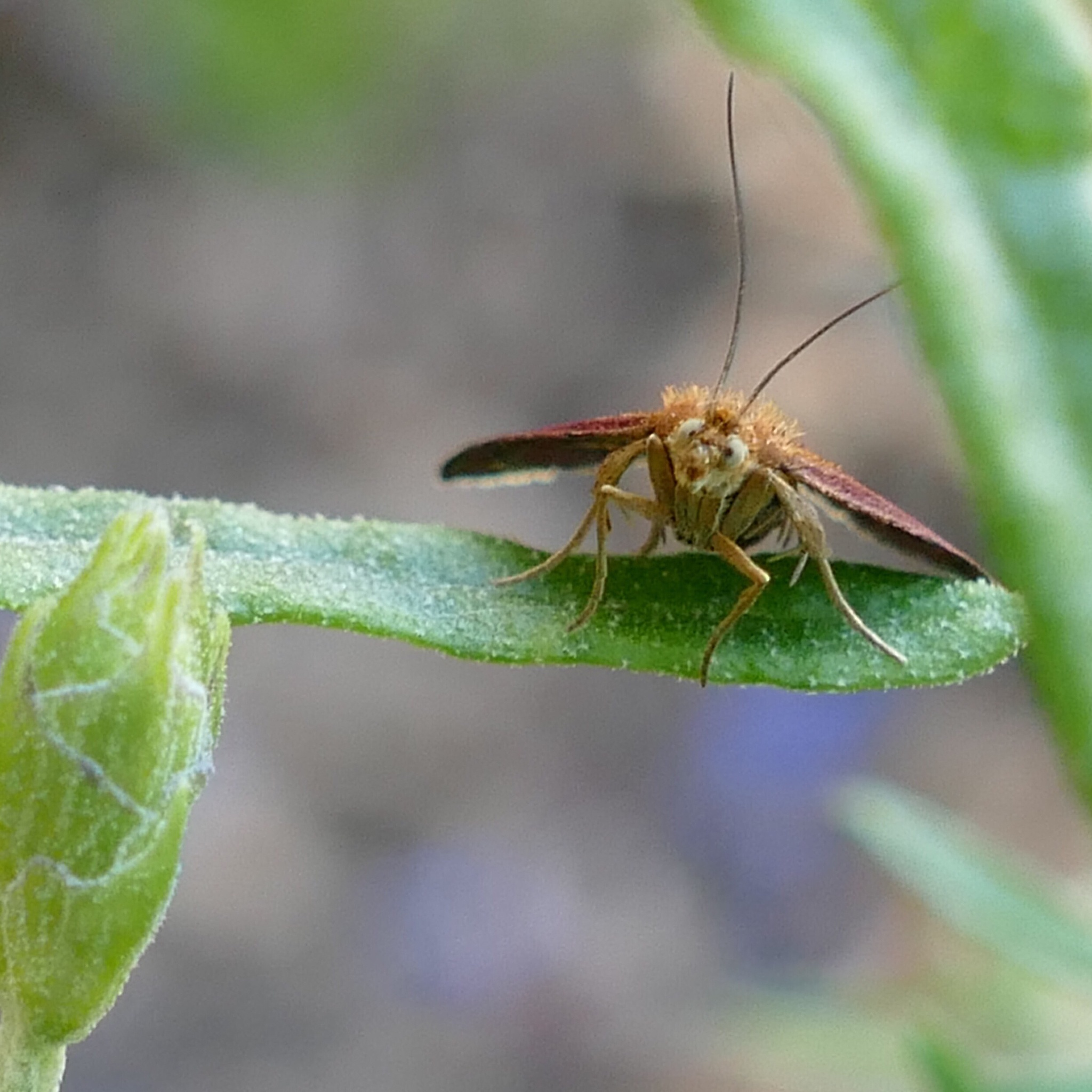 Mint Moth by Jules H