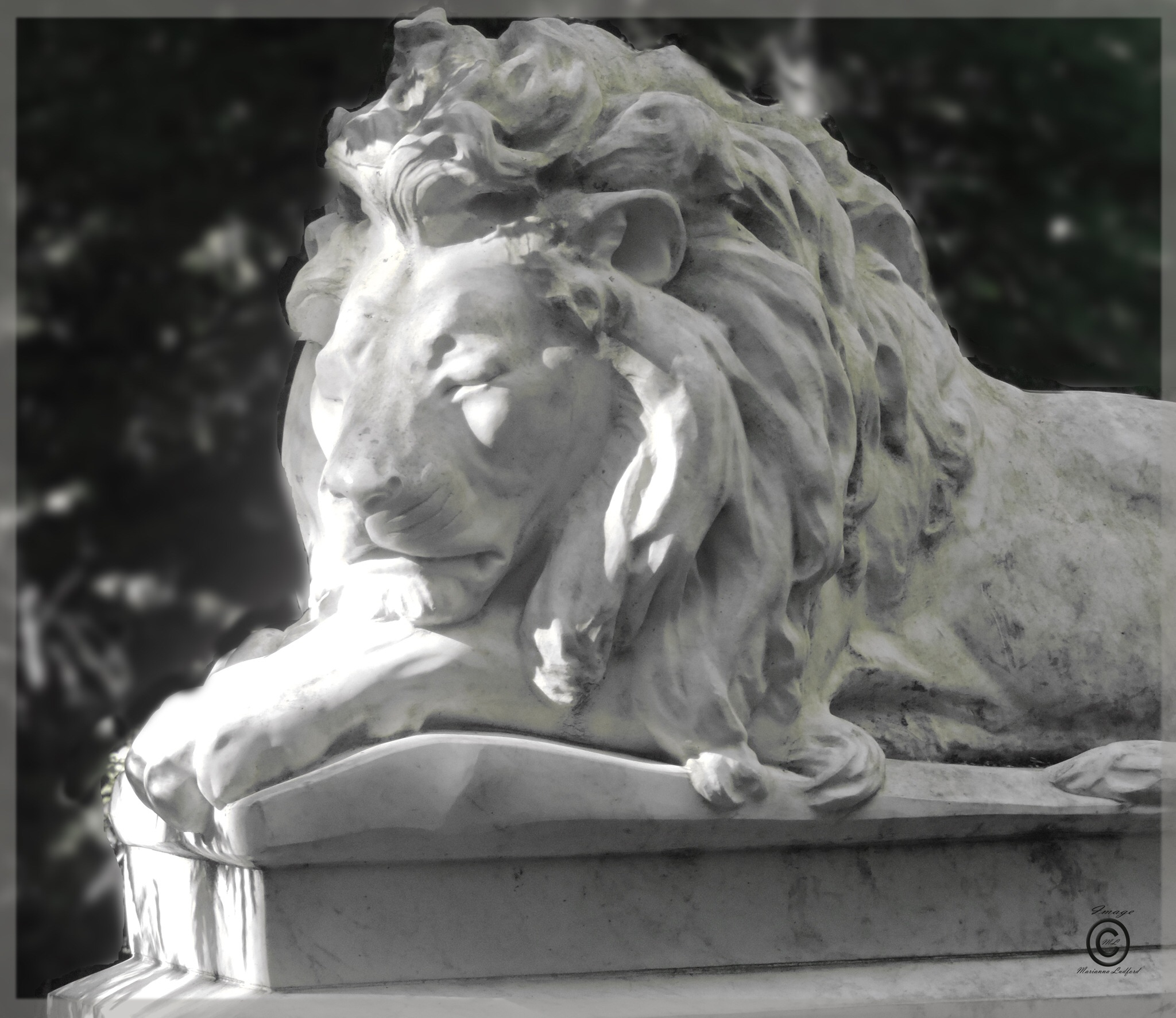 BOSTOCK LION  by marinna67